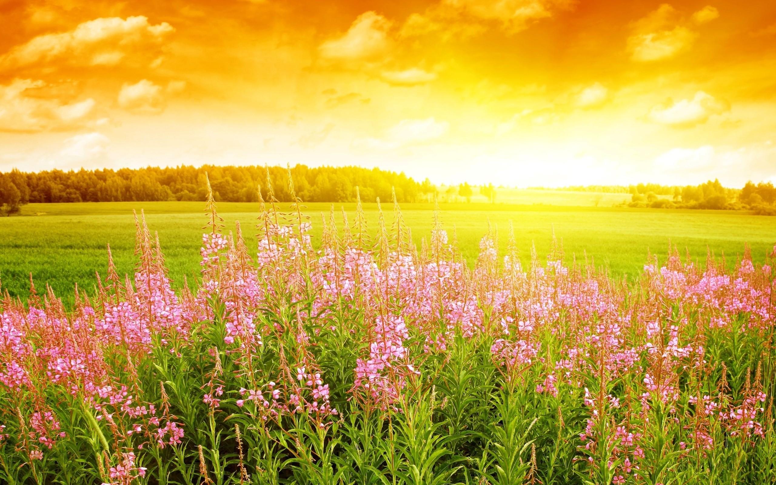 Field: Summer Sunset Flowers Field Free Download Wallpaper HD 16:9 ...