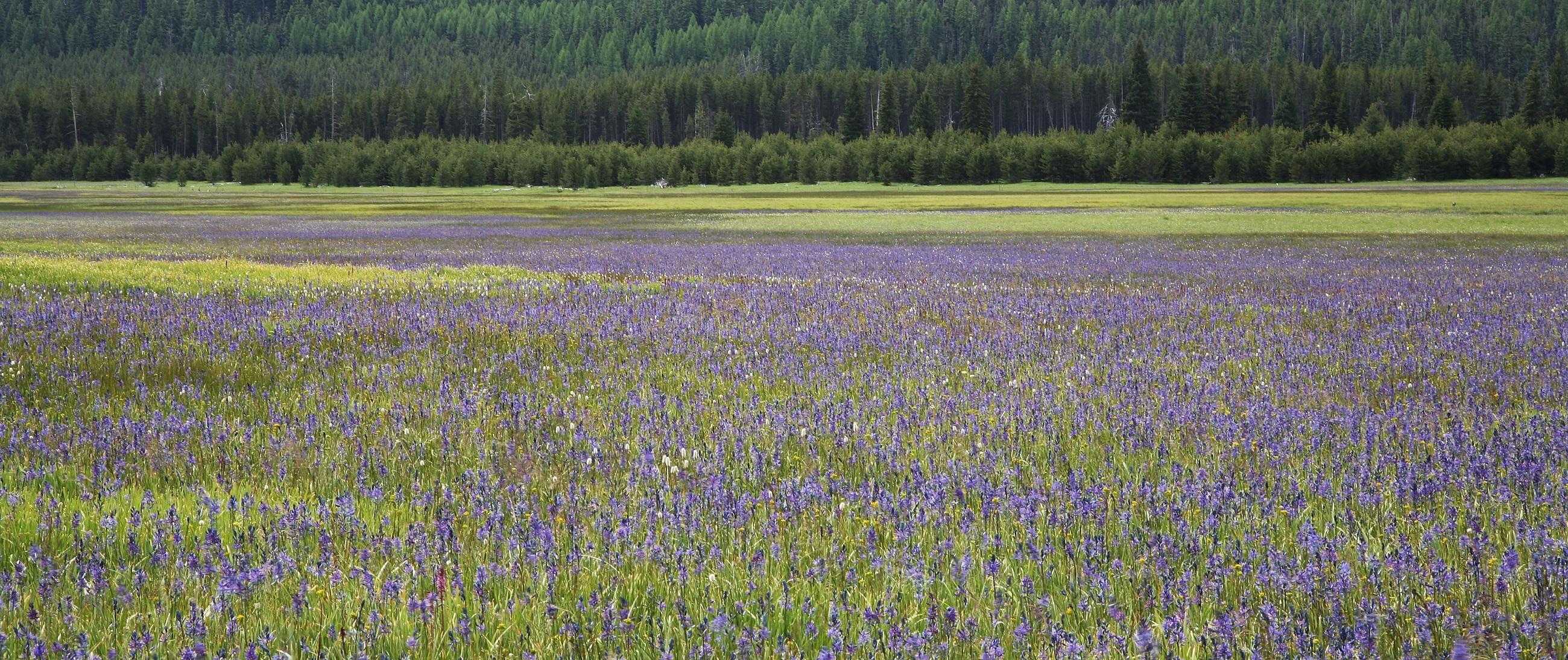 Flowers Field, Blooming, Flower, Fragrance, Fresh, HQ Photo