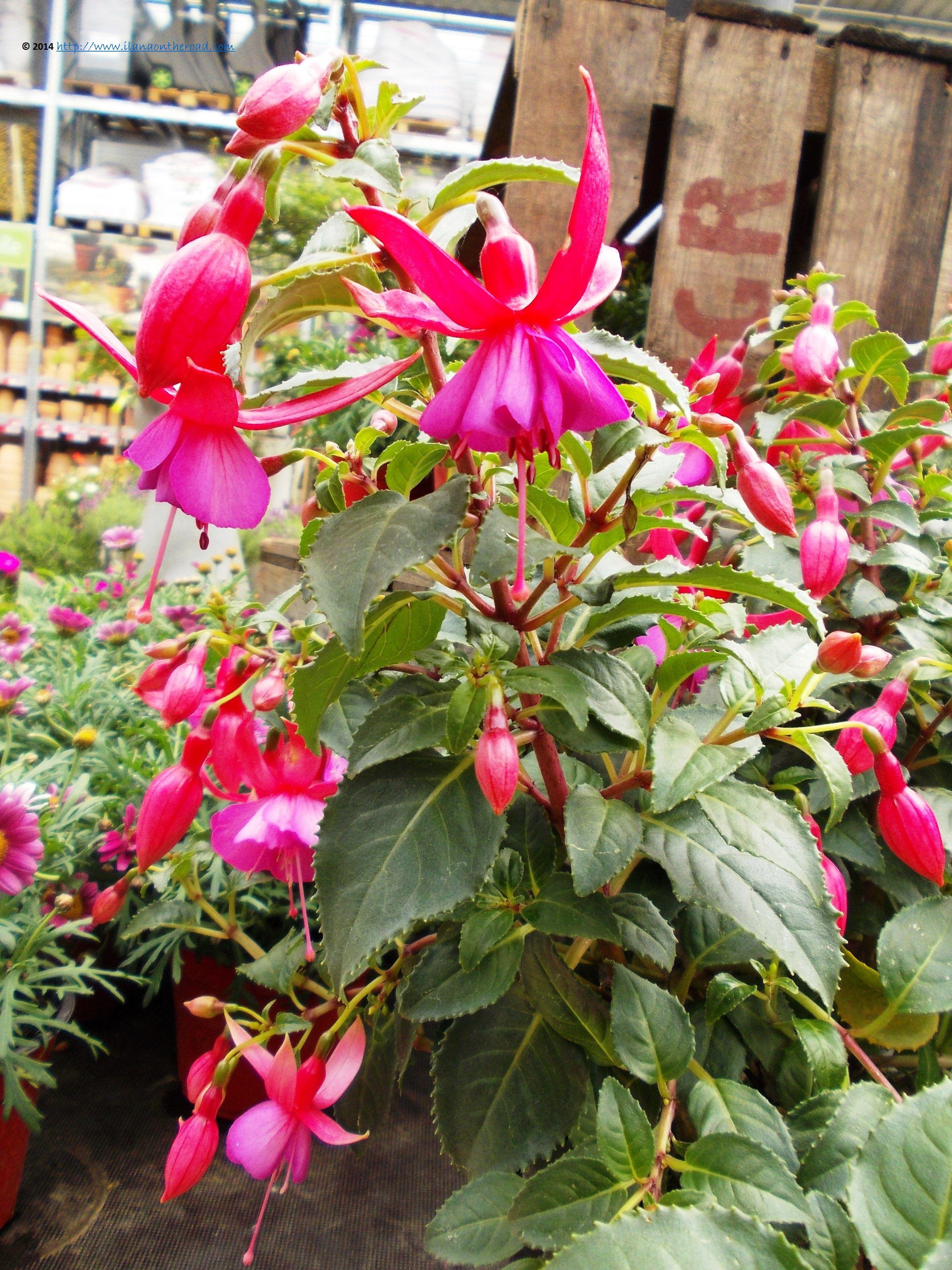 Beautiful spring flowers in Berlin | Flowers | Pinterest | Spring ...