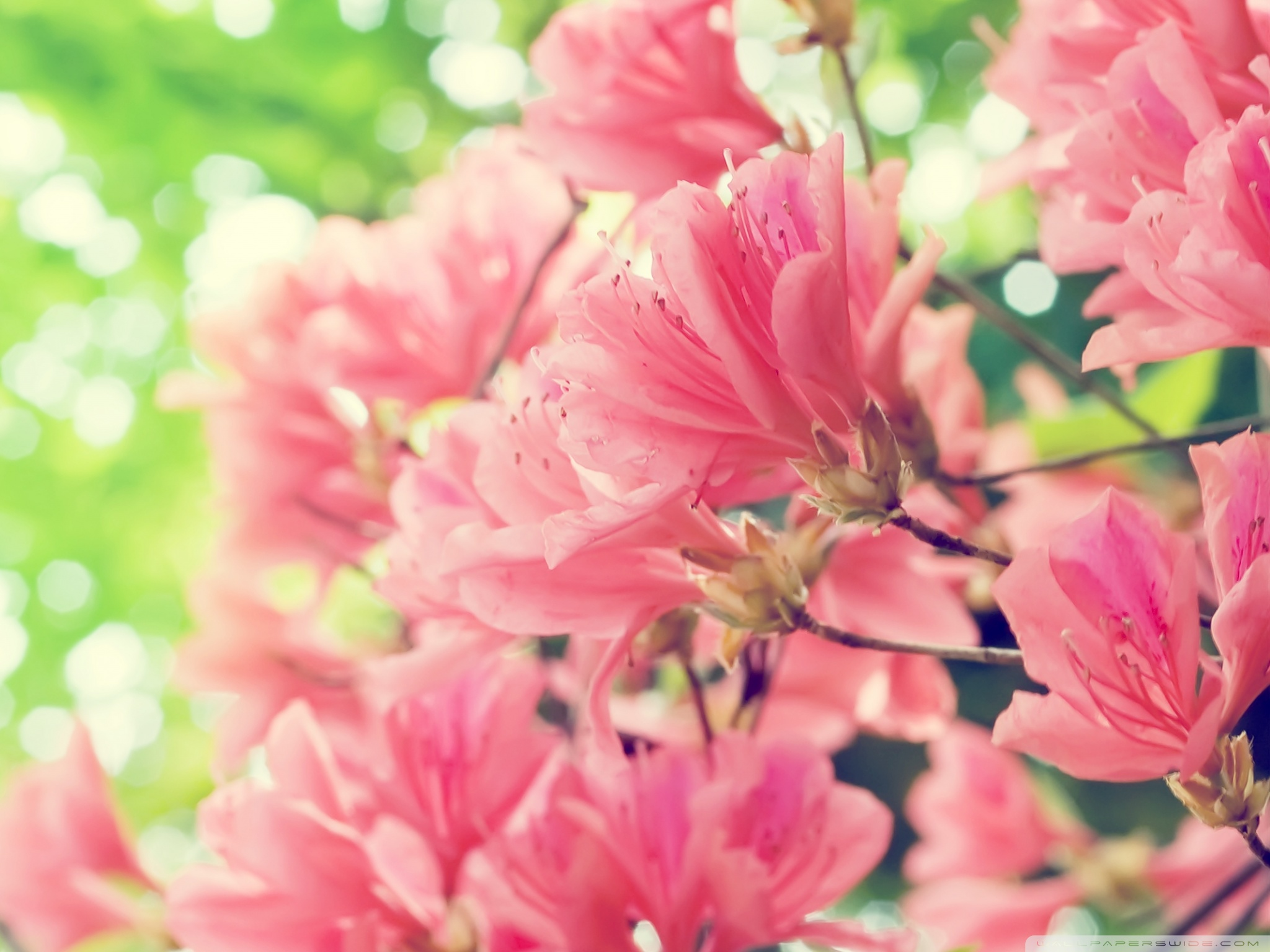 Free Photo Flowers In Spring Ocean Nature Sea Free Download
