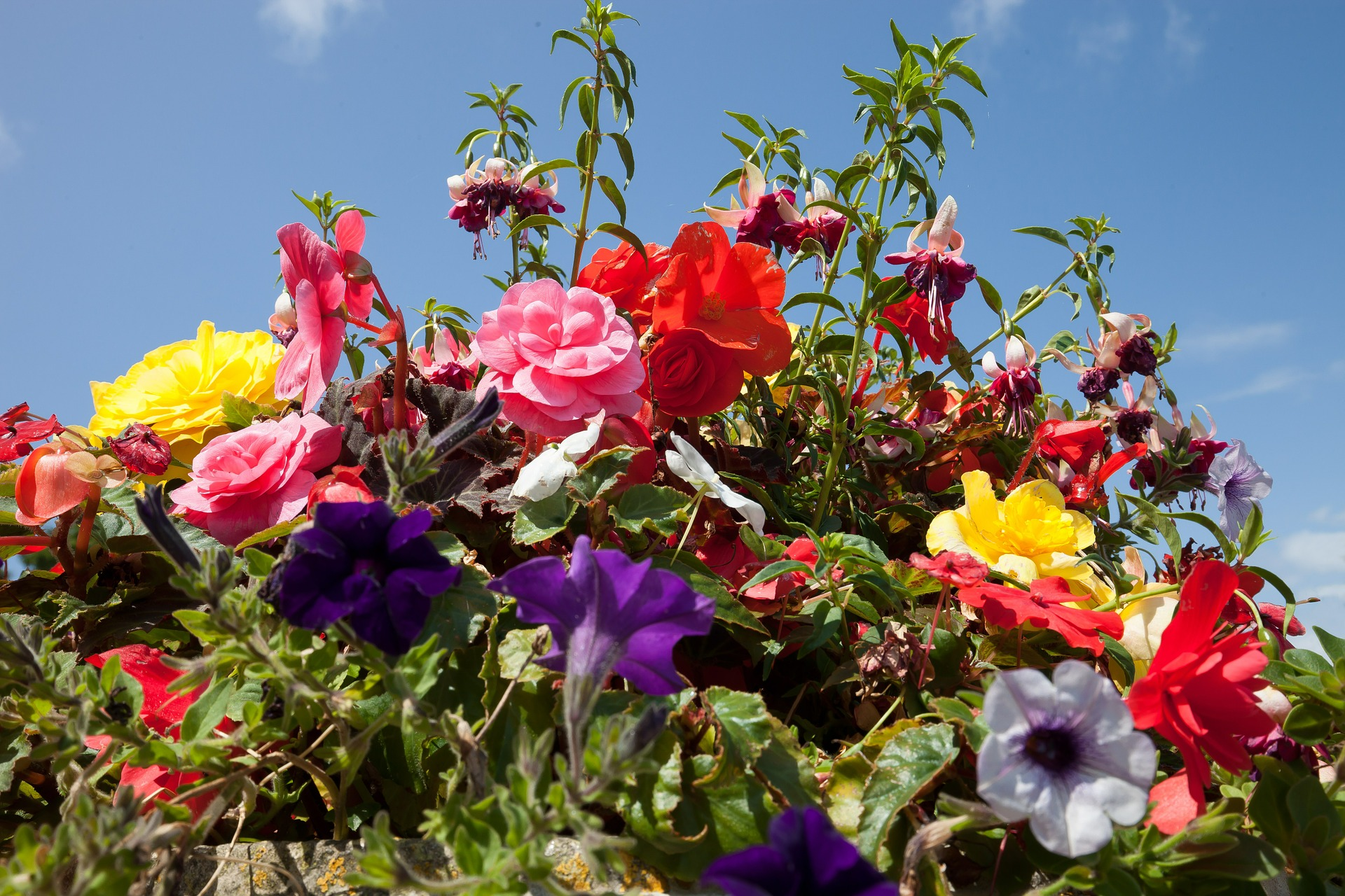 Flowers in the Garden, Blooming, Flower, Fragrance, Fresh, HQ Photo