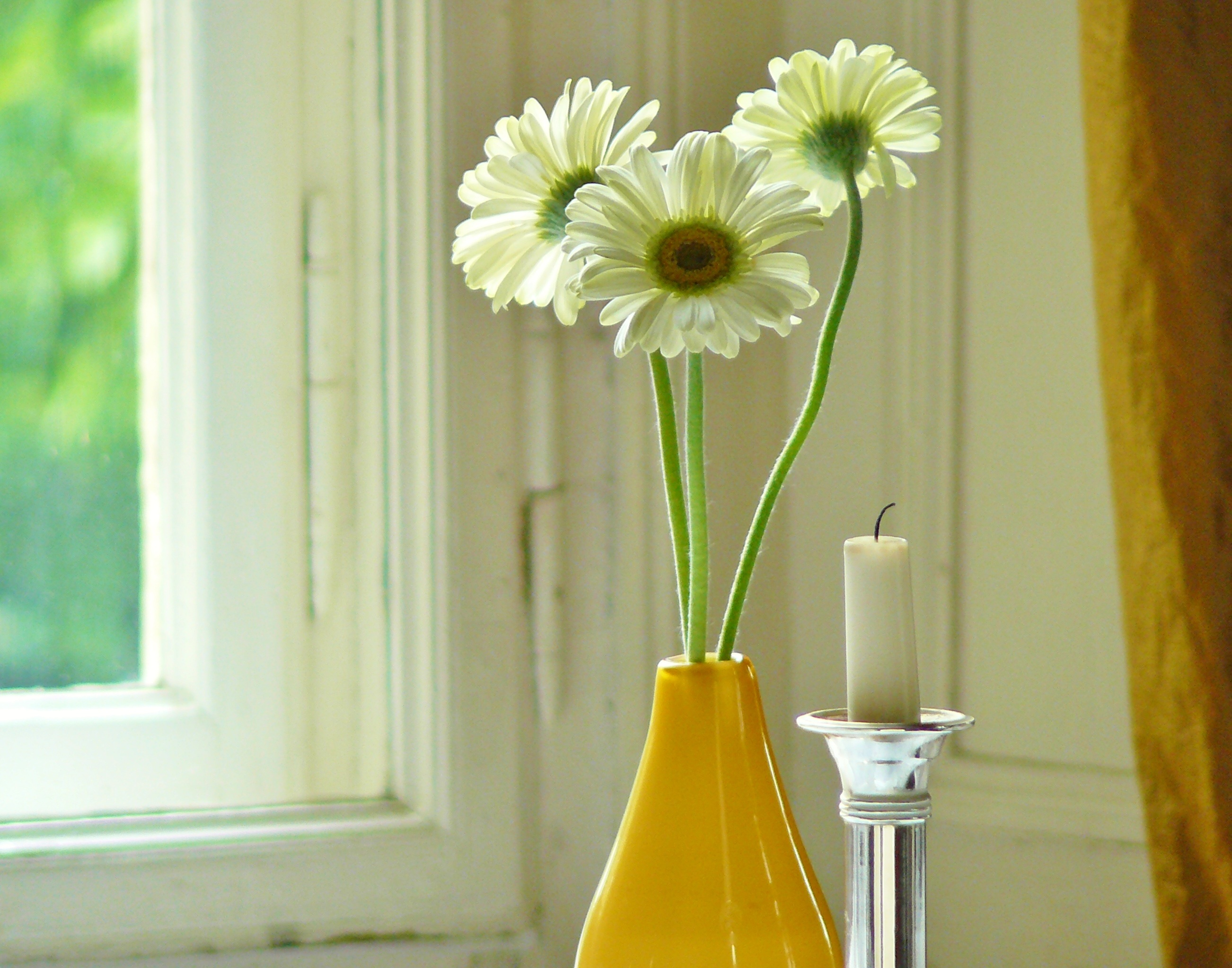 Flowers in the Room, Blooming, Flower, Fragrance, Fresh, HQ Photo