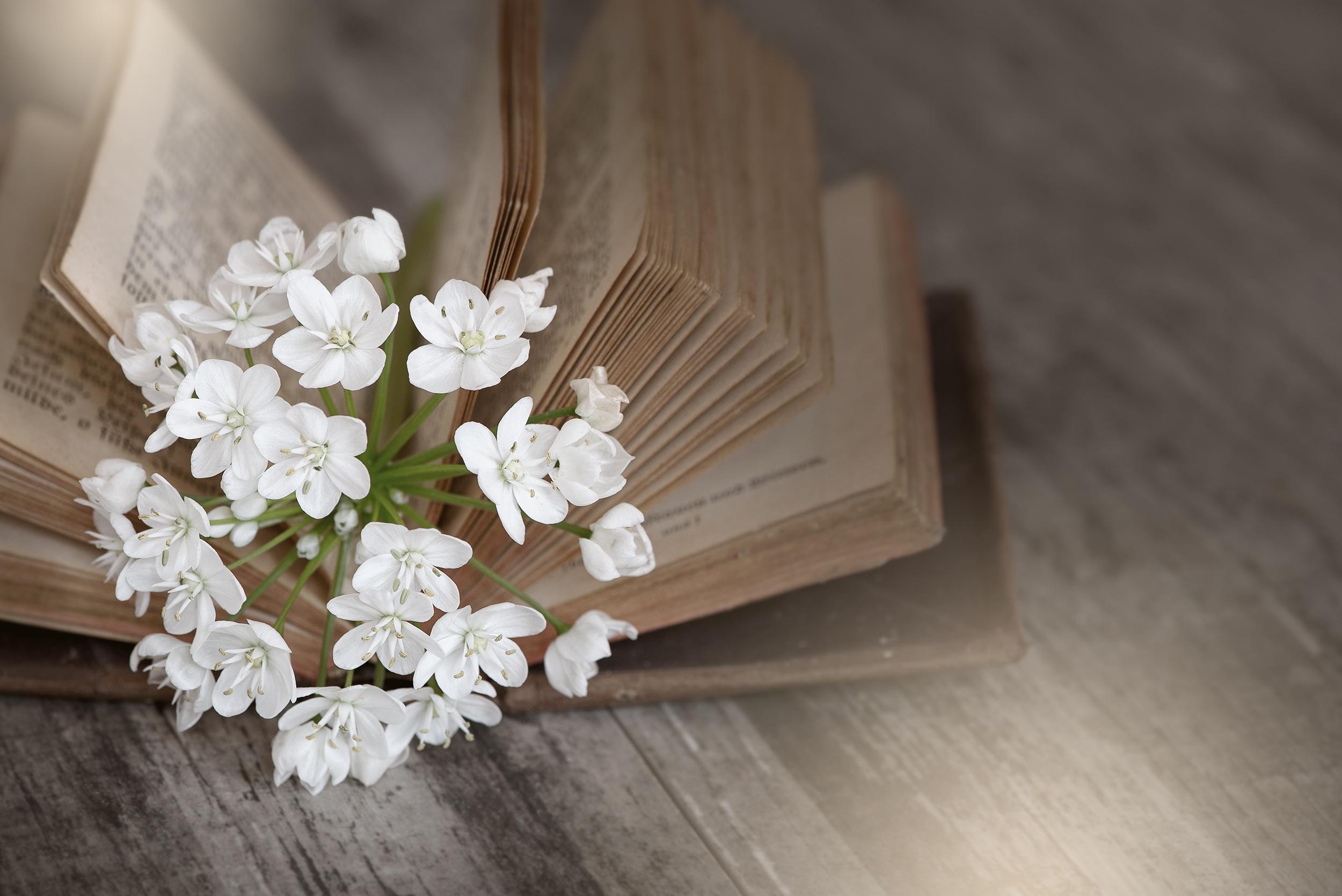 Flowers n book photo