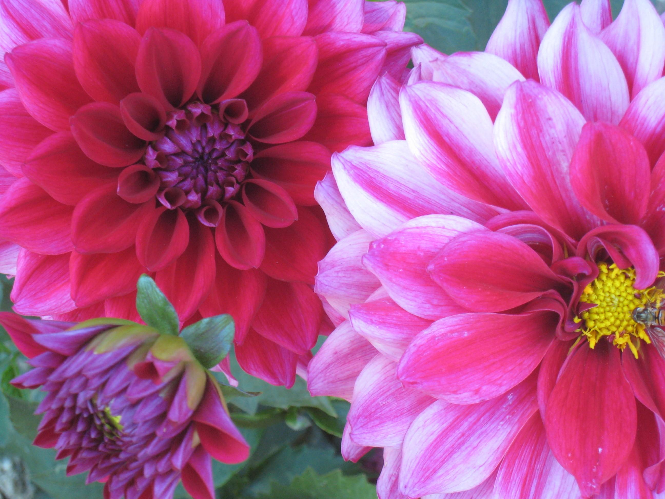 Flower Of Paris | Flowers