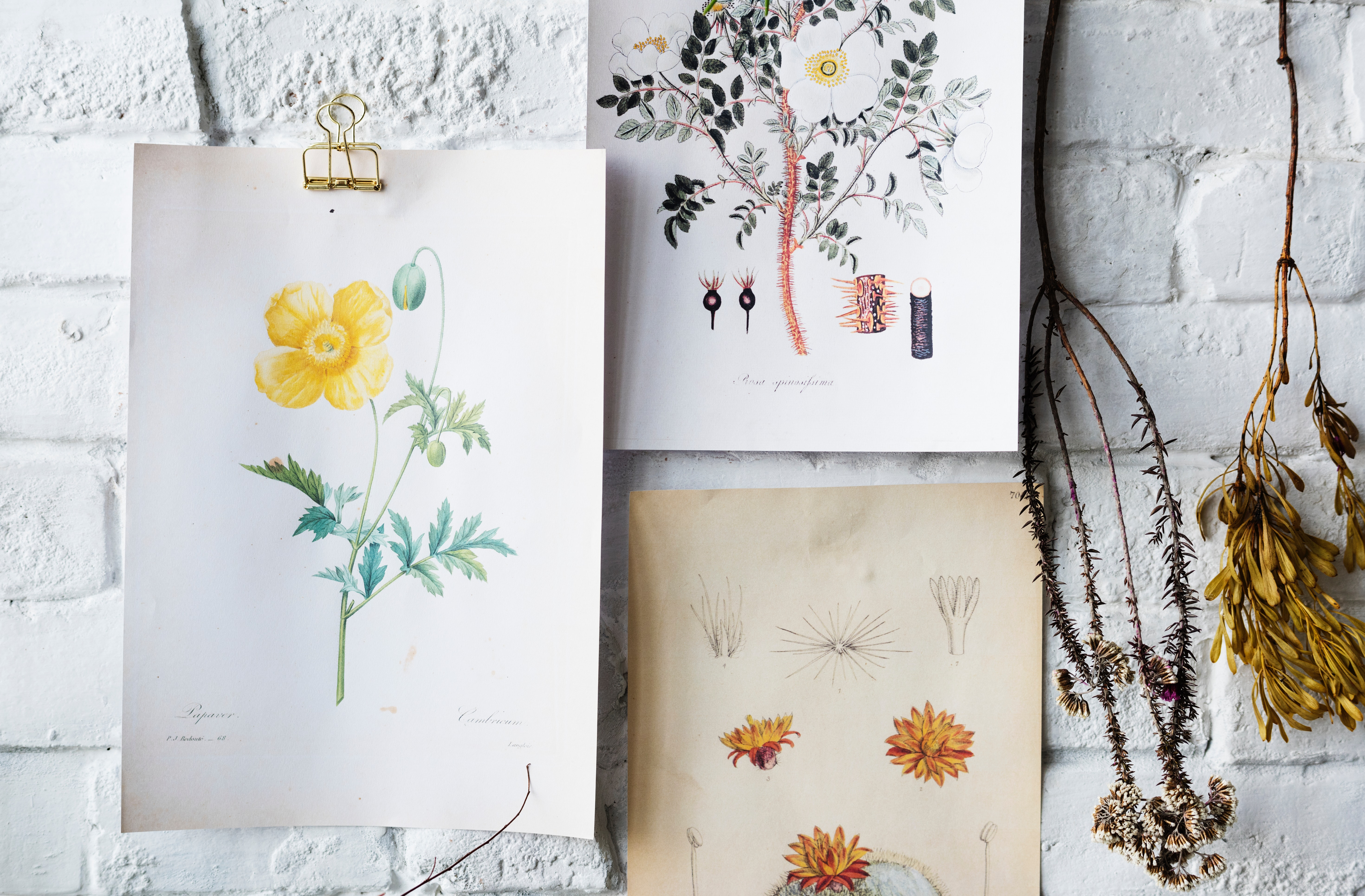 Flowers sketches on white brick wall photo