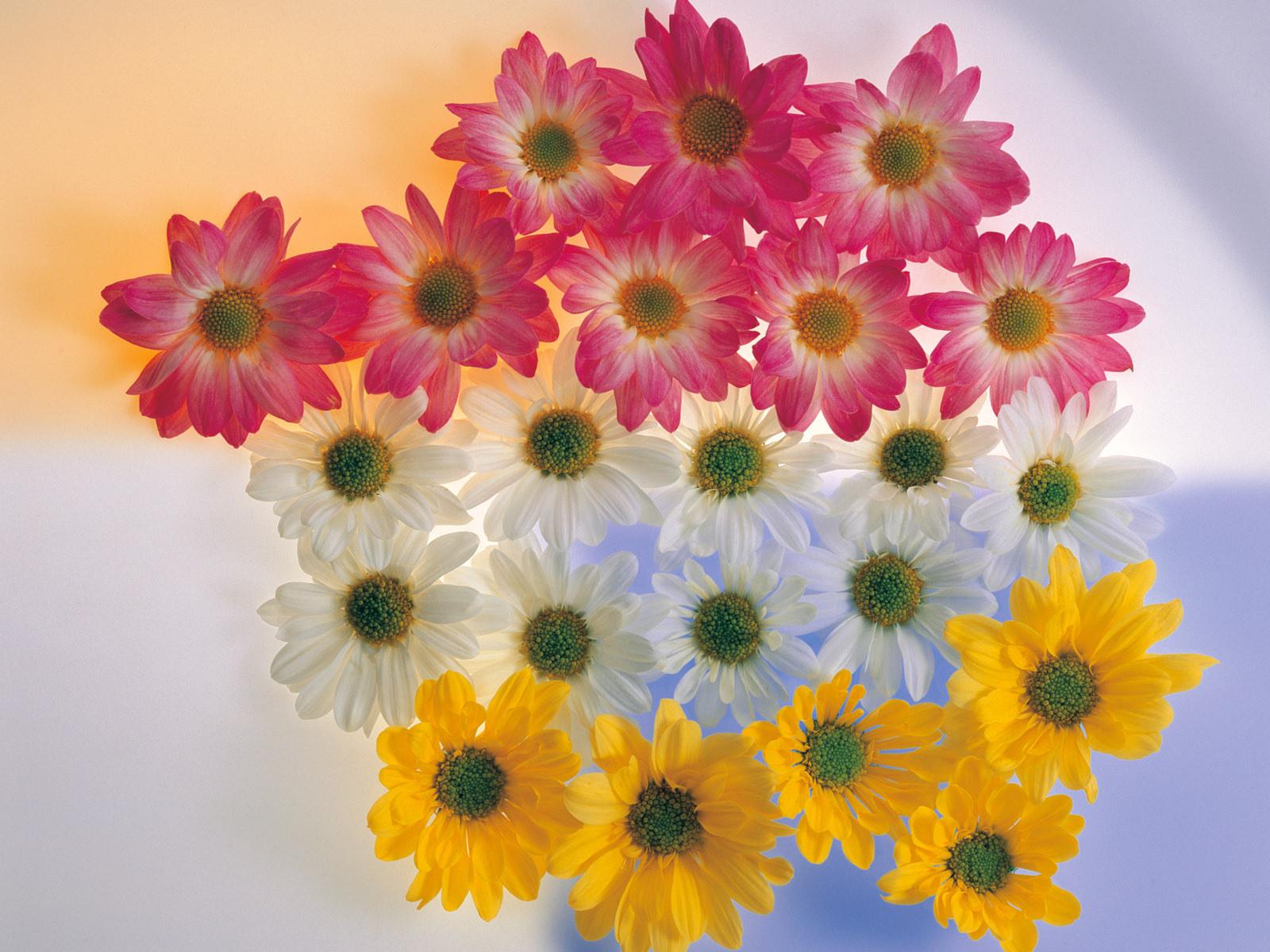 Beautiful Flowers Photos Very Nice - Billion Estates | #90621