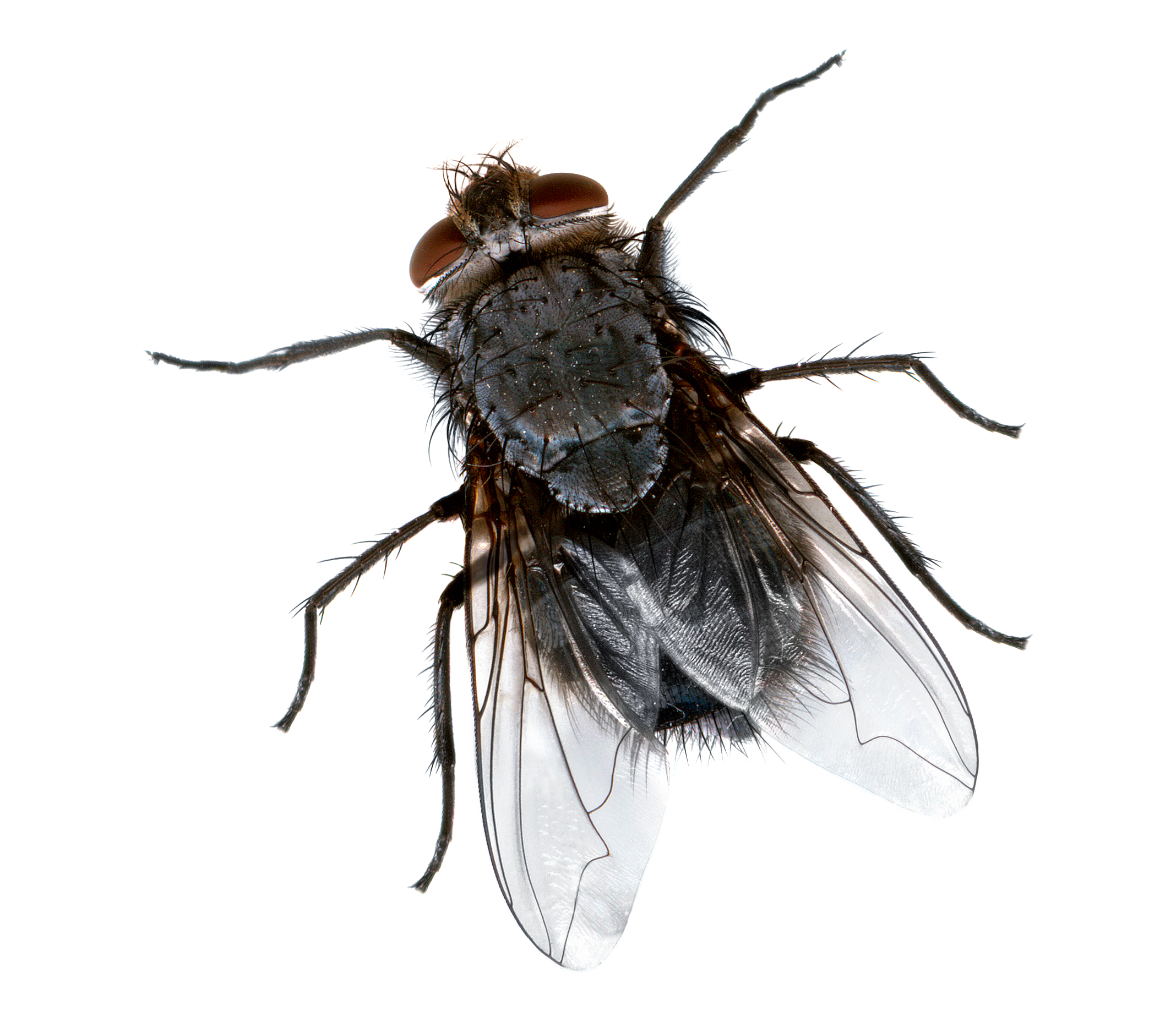 File:Fly close.jpg - Wikimedia Commons
