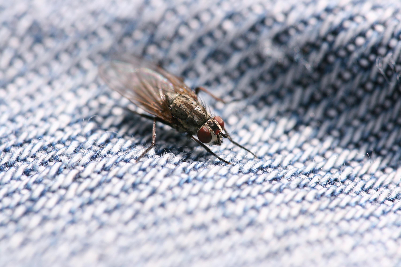 Fly, Animal, Bug, Eye, Macro, HQ Photo