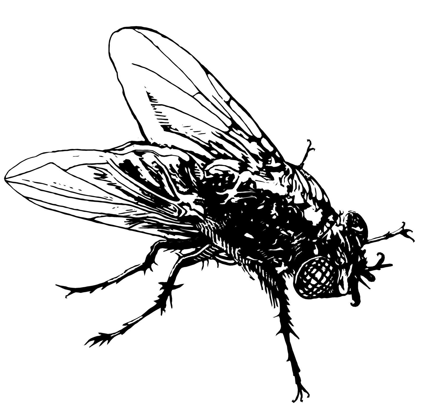 Fly Beautiful Image Drawing | Drawing Skill