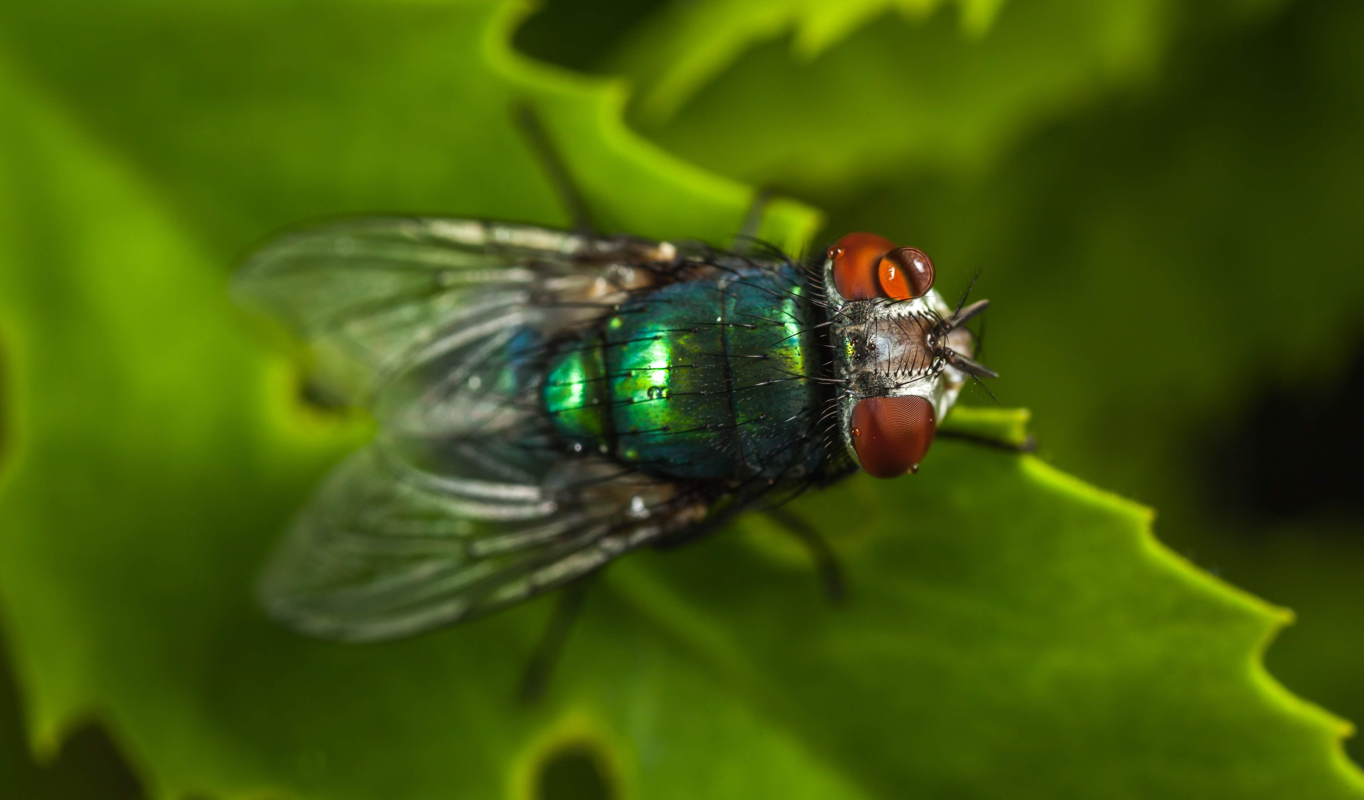 Macro Photography of Green Fly · Free Stock Photo
