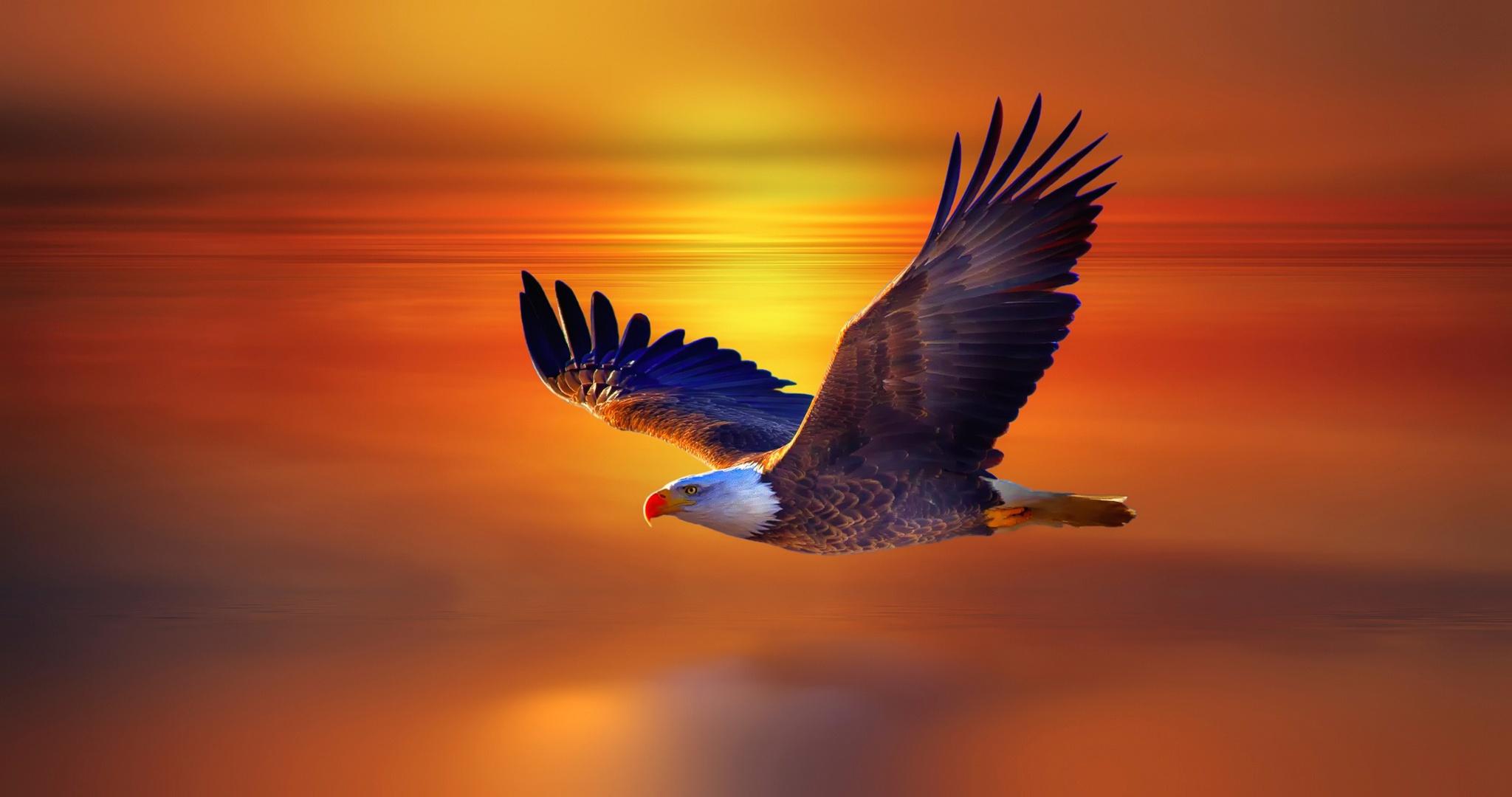 Flying adler photo