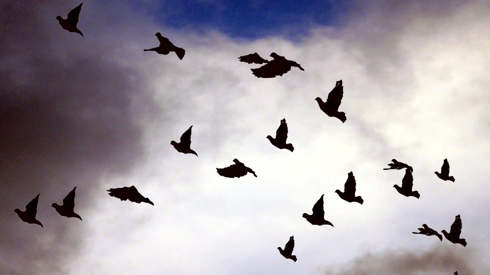 Flying birds against cloudy sky Motion Background - Videoblocks