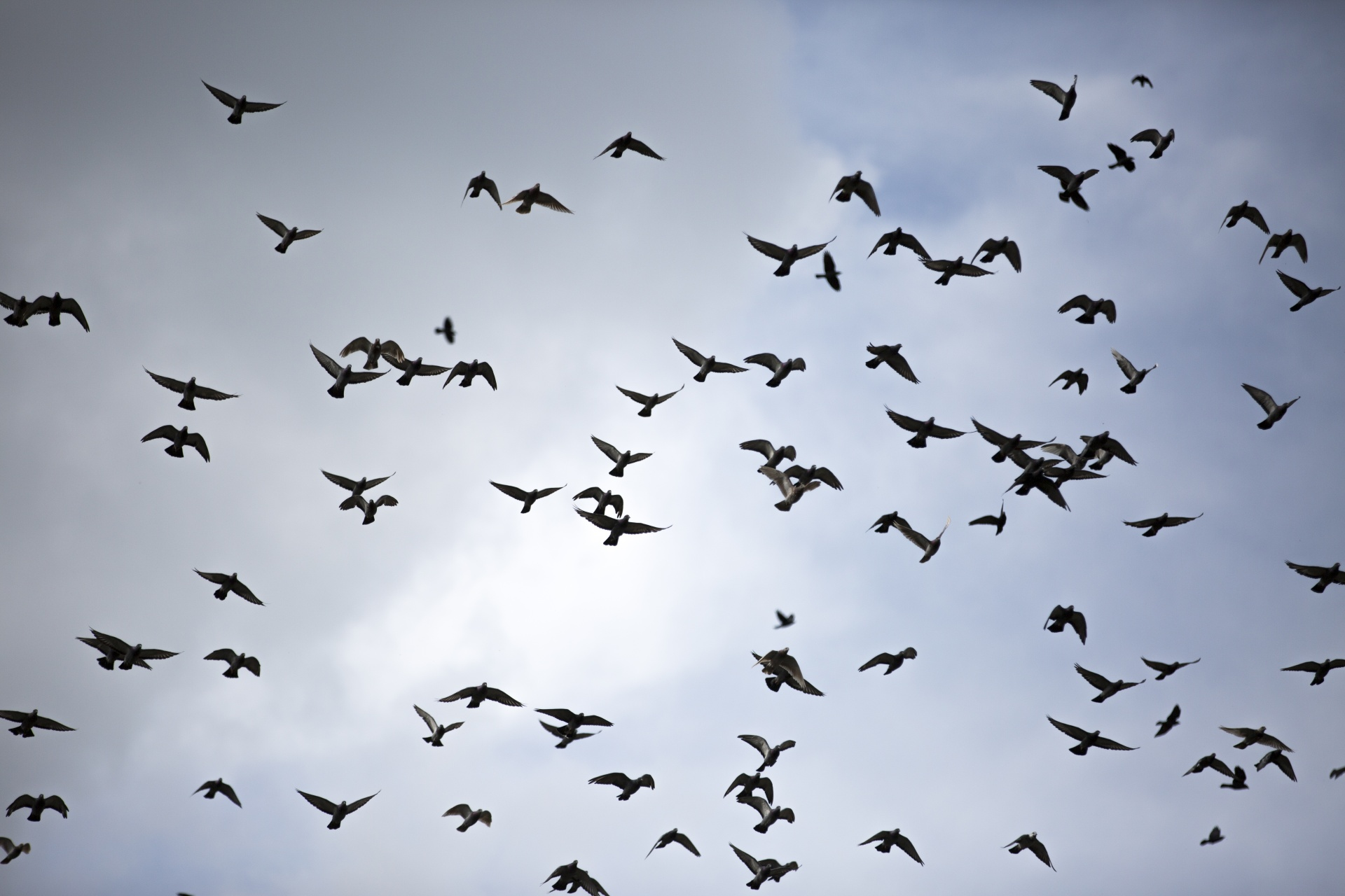 Flying Birds Free Stock Photo - Public Domain Pictures
