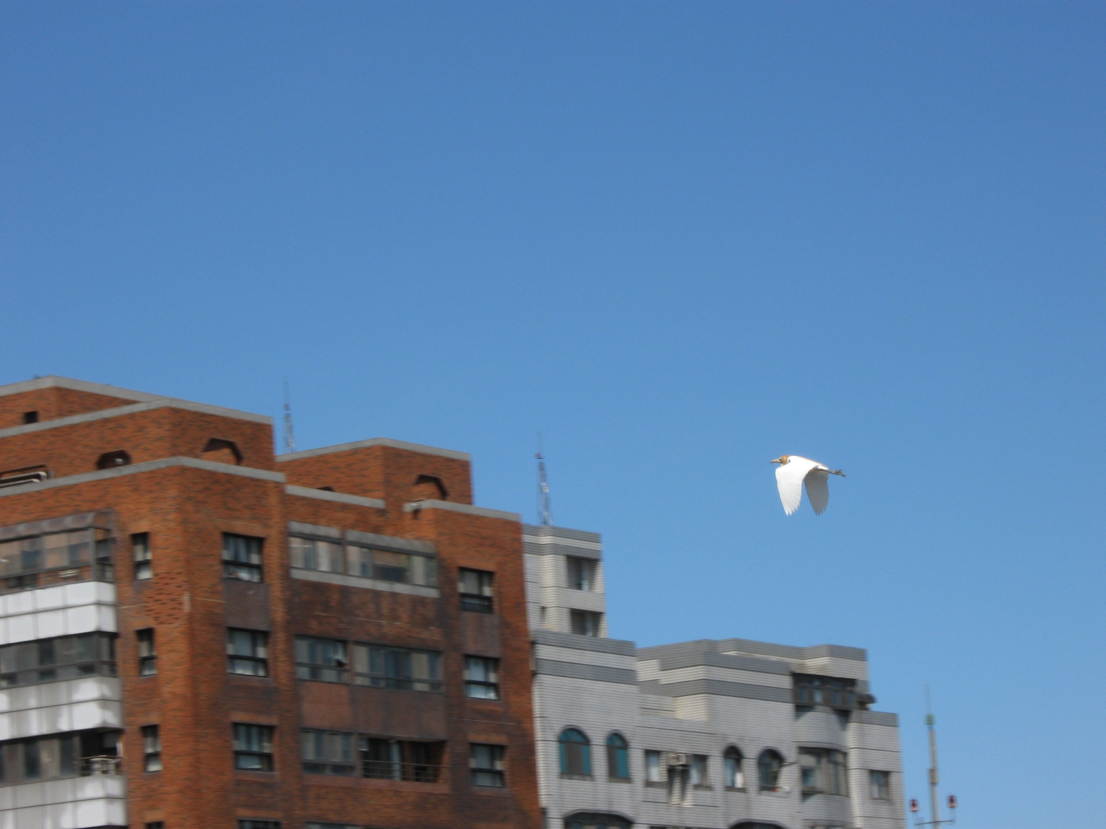 Flying over roof tops photo