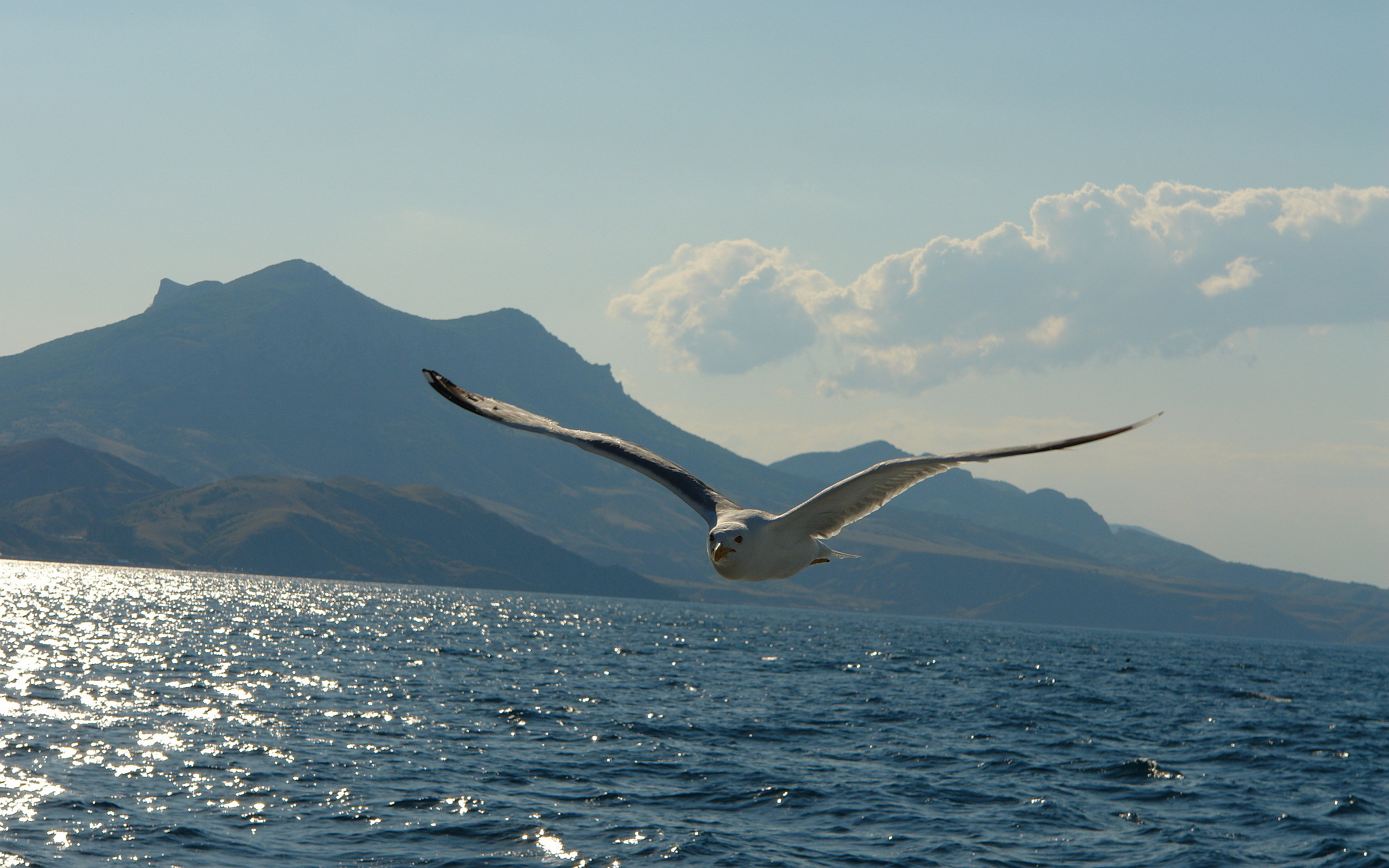 Flying Seagull #7012299