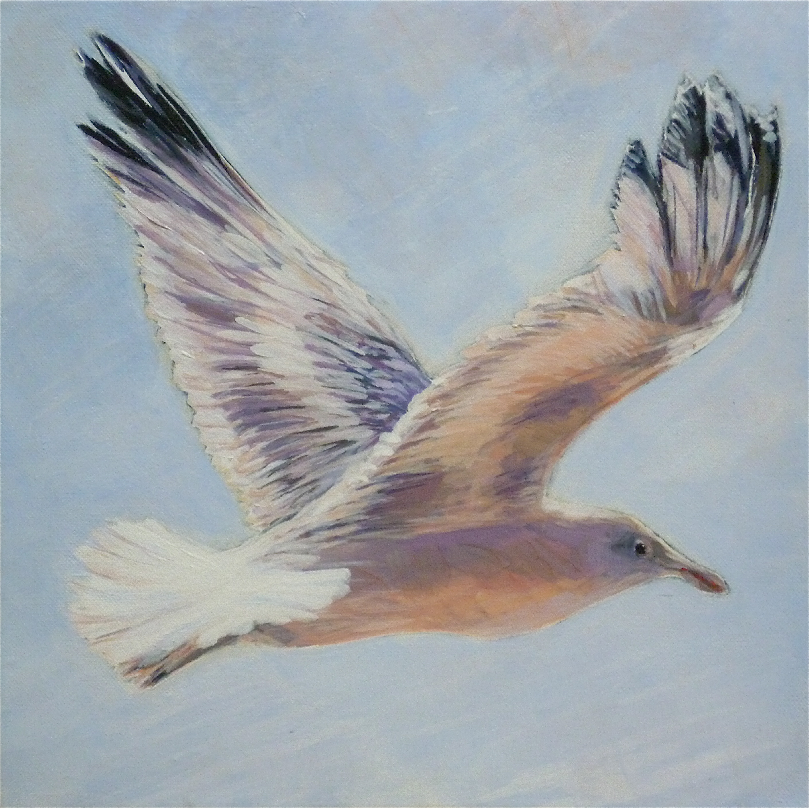 flying seagull | Elizabeth Moore Golding