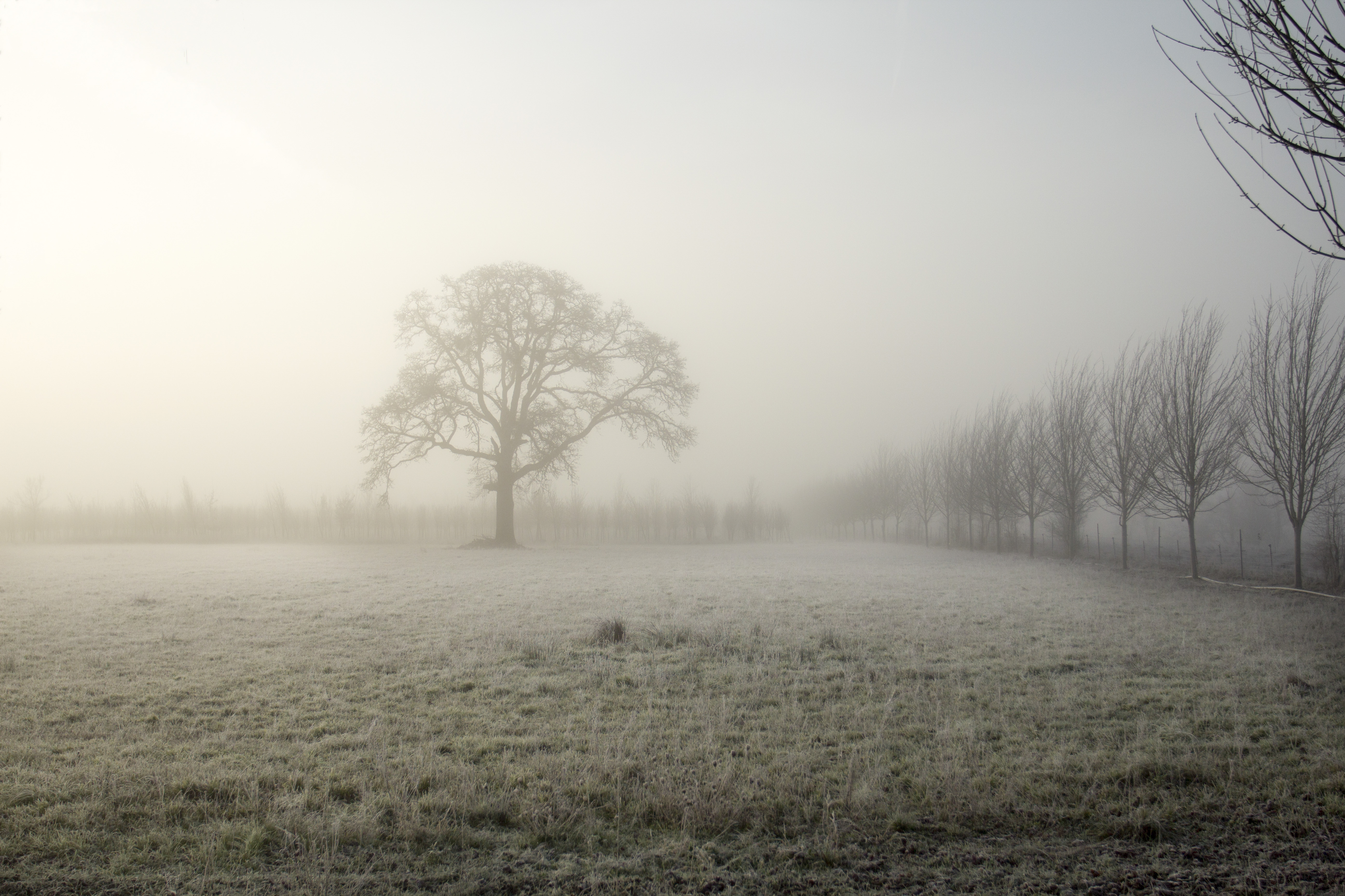 Fog and Frost, Field, Fog, Frost, Grass, HQ Photo