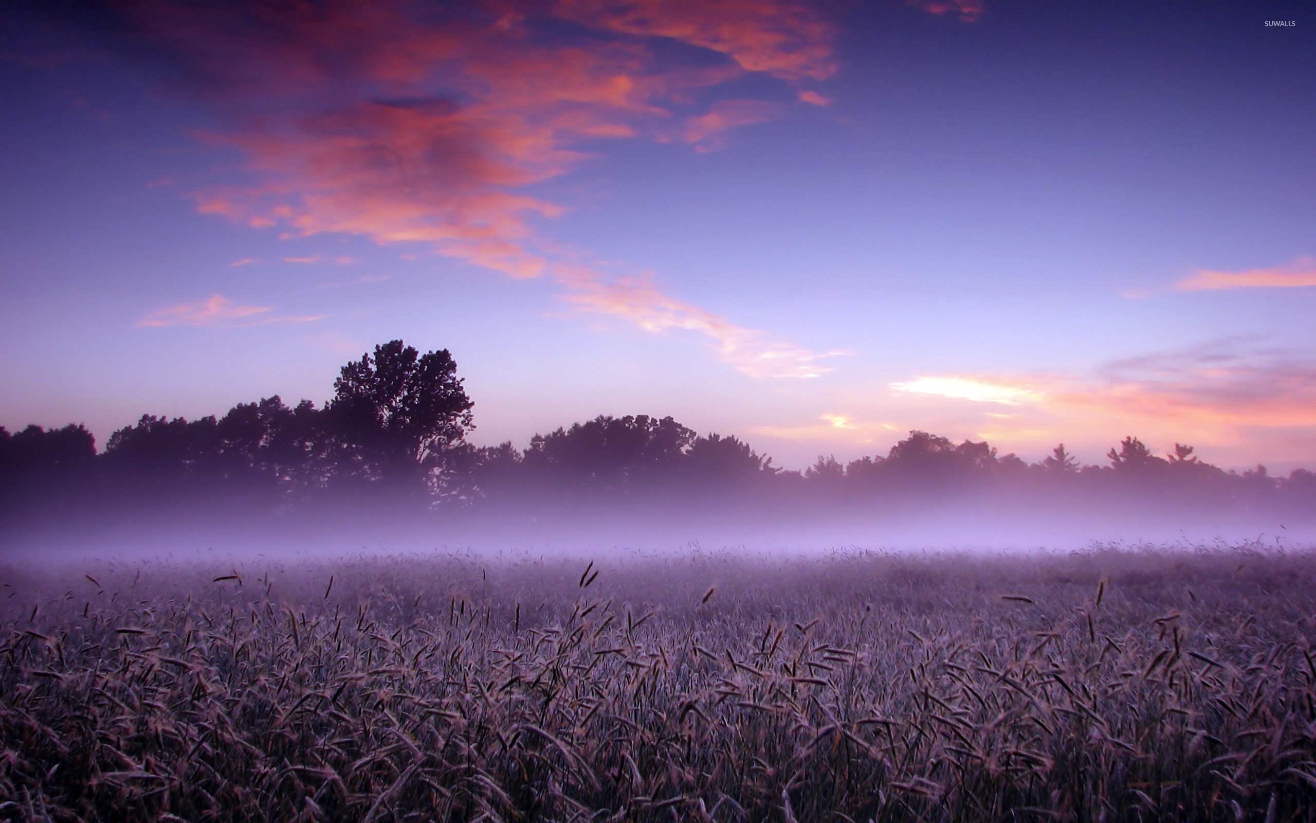 Foggy field photo