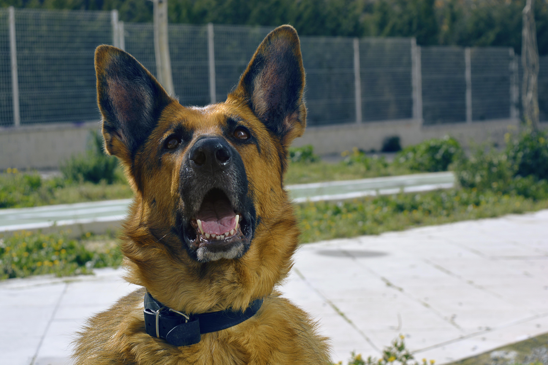 Follow the orders, Animal, Dog, Follow, Friend, HQ Photo