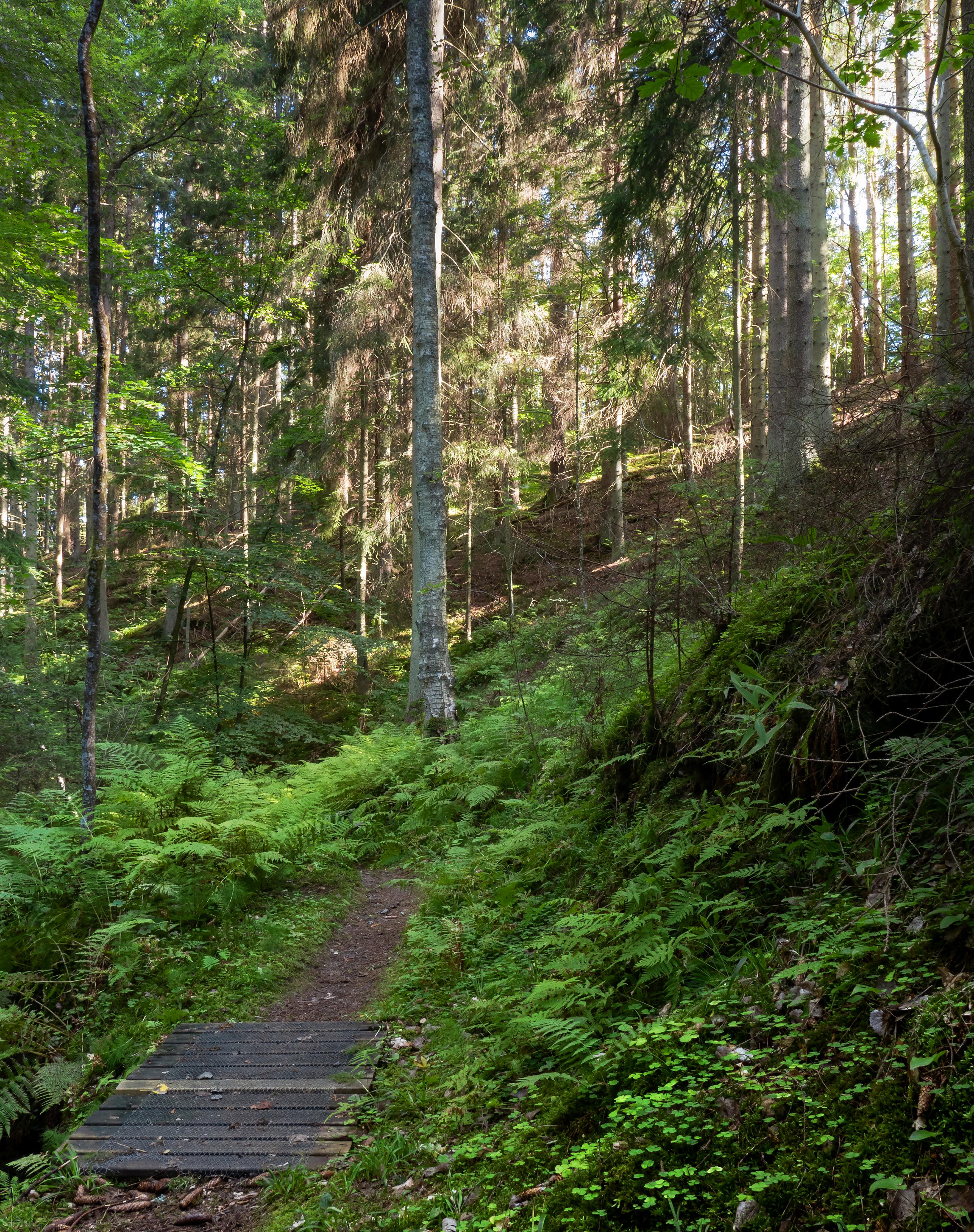 Footbridge and a sunny slope in Gullmarsskogen ravine, Ferns, Footbridge, Forest, Gullmarsskogen, HQ Photo