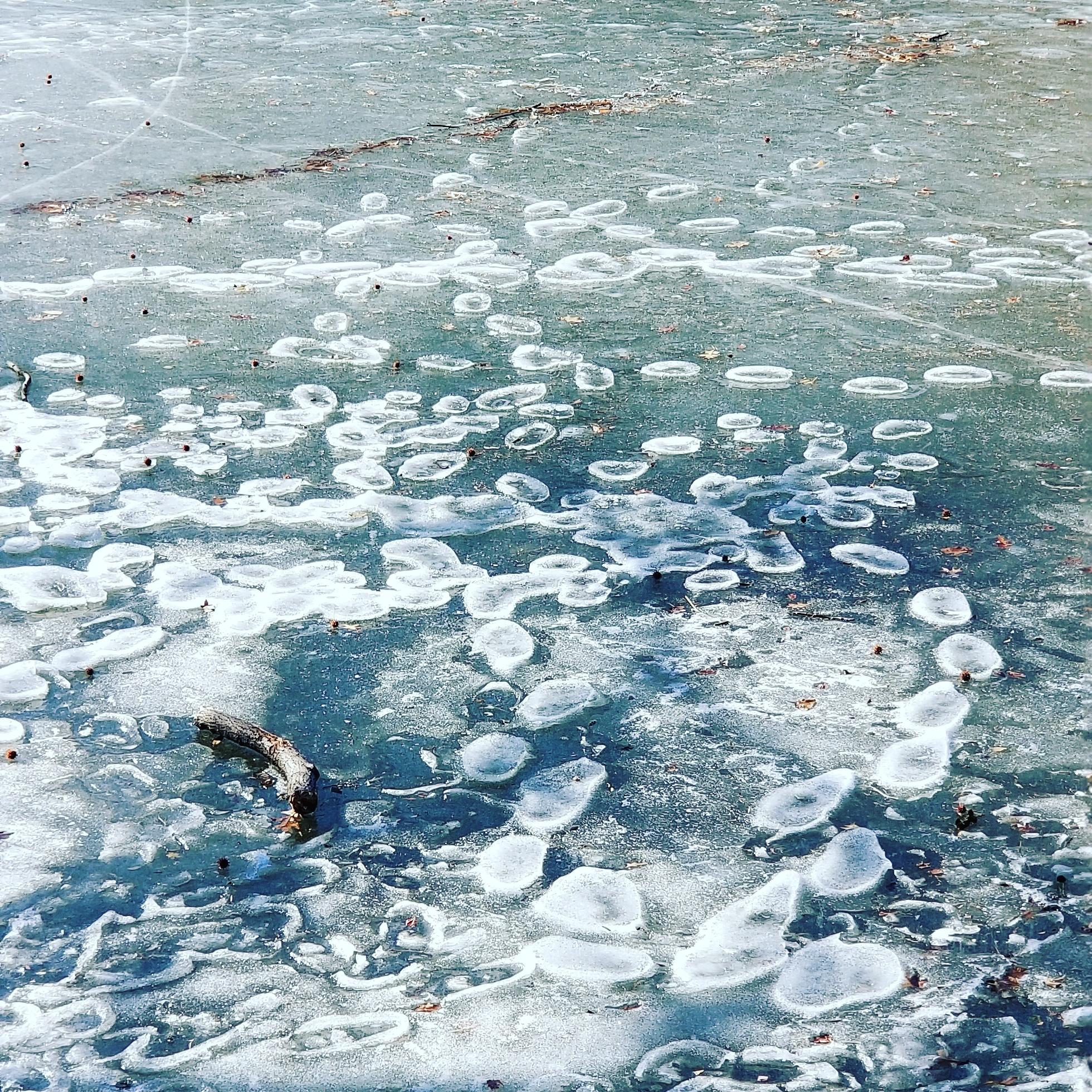 Footsteps on melting ice : pics