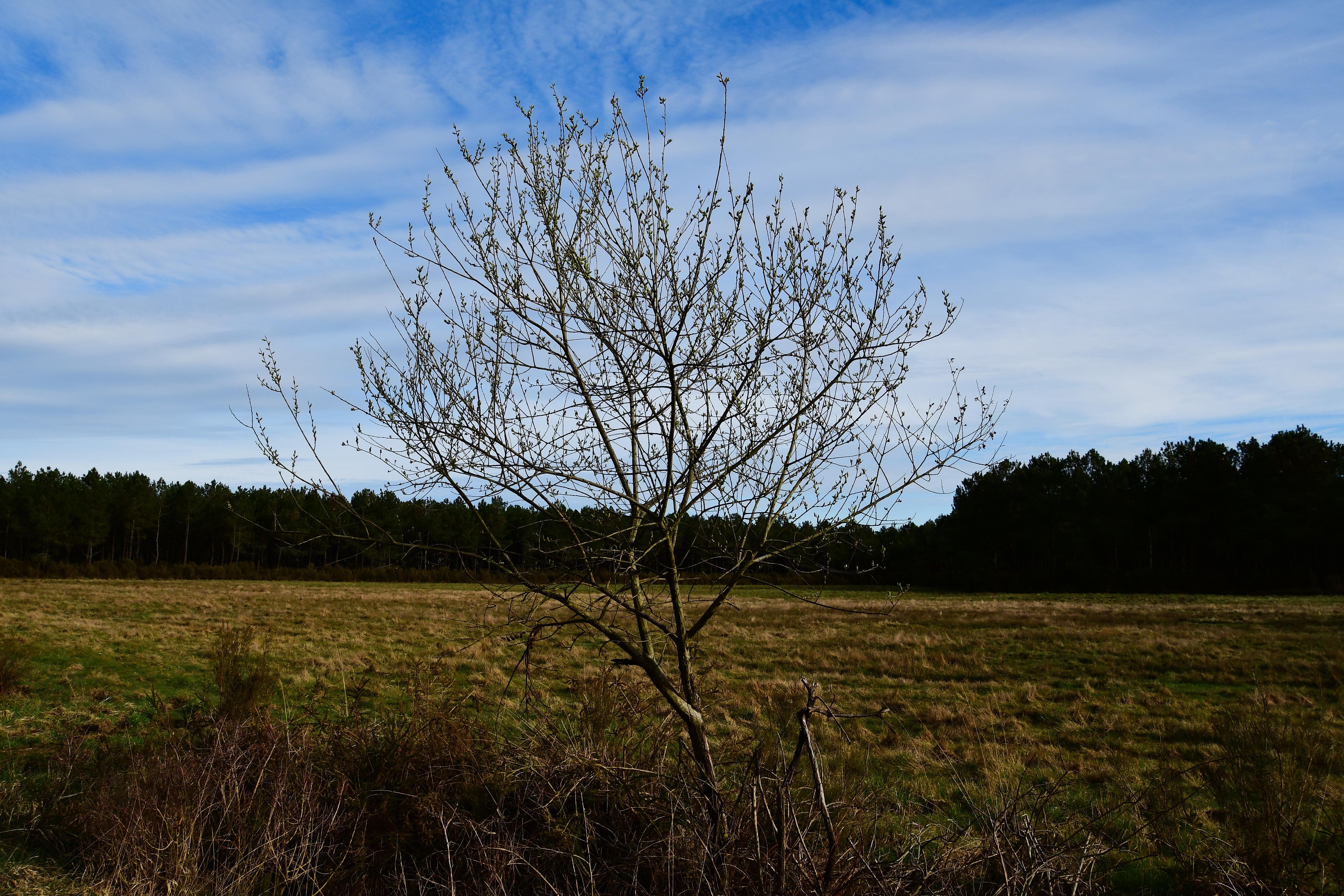 Forêt de moulière - la grosse boussée (voir l'itinéraire sur : http://ansozour.free.fr/enbalade.html) photo