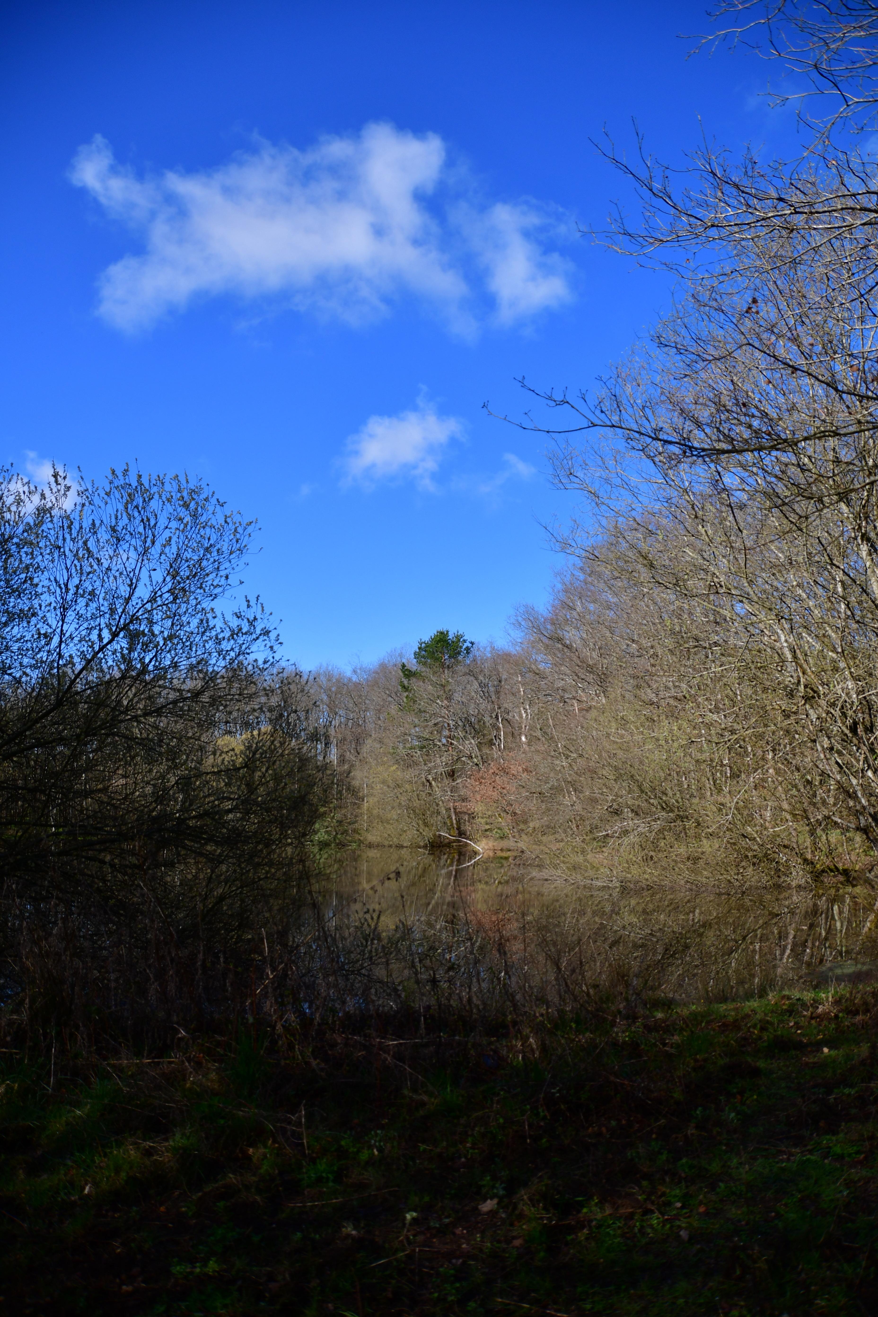 Forêt de moulière - le gâchet de villiers (voir l'itinéraire sur : http://ansozour.free.fr/enbalade.html) photo