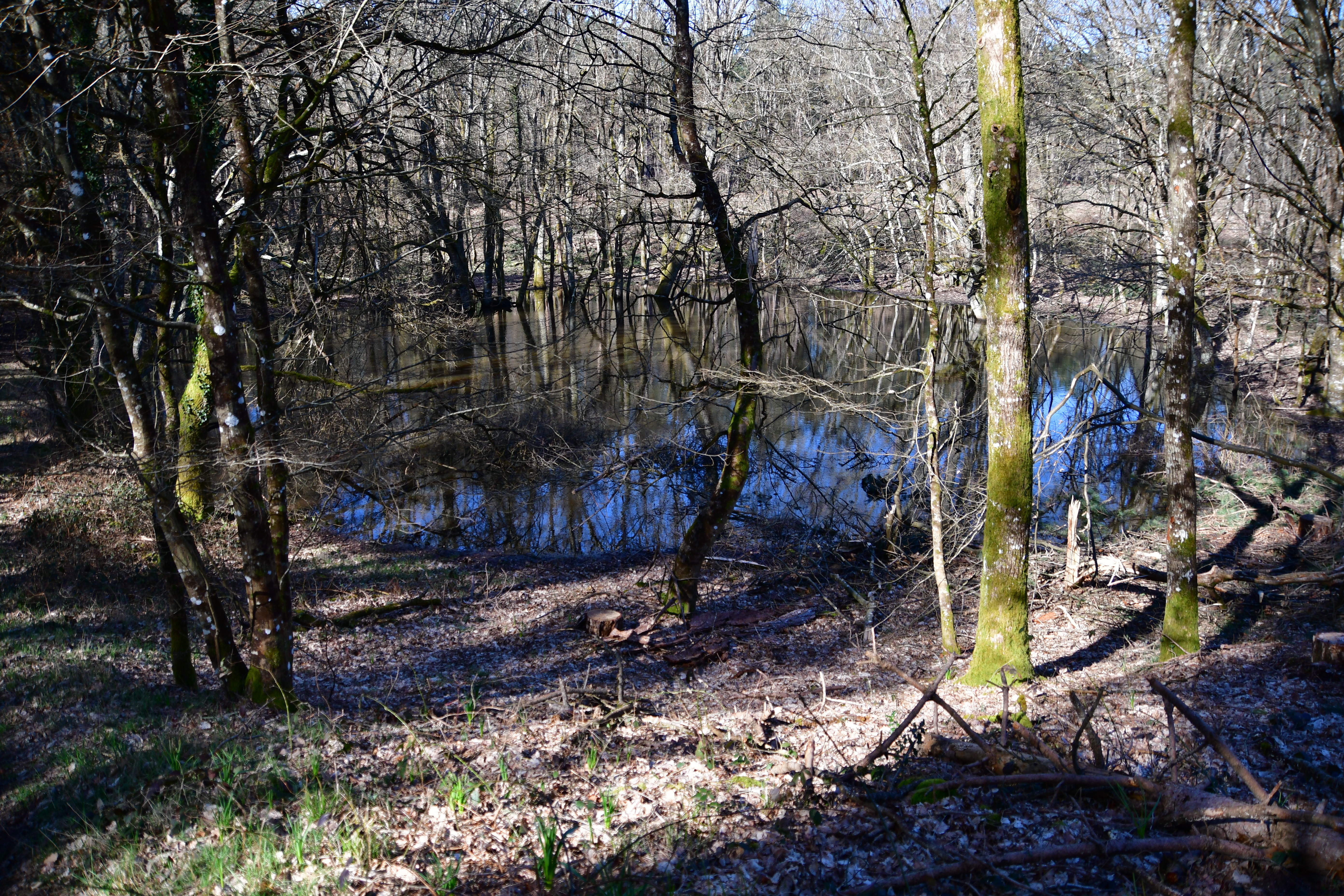 Forêt de moulière - le grand soubis (voir l'itinéraire sur : http://ansozour.free.fr/enbalade.html) photo