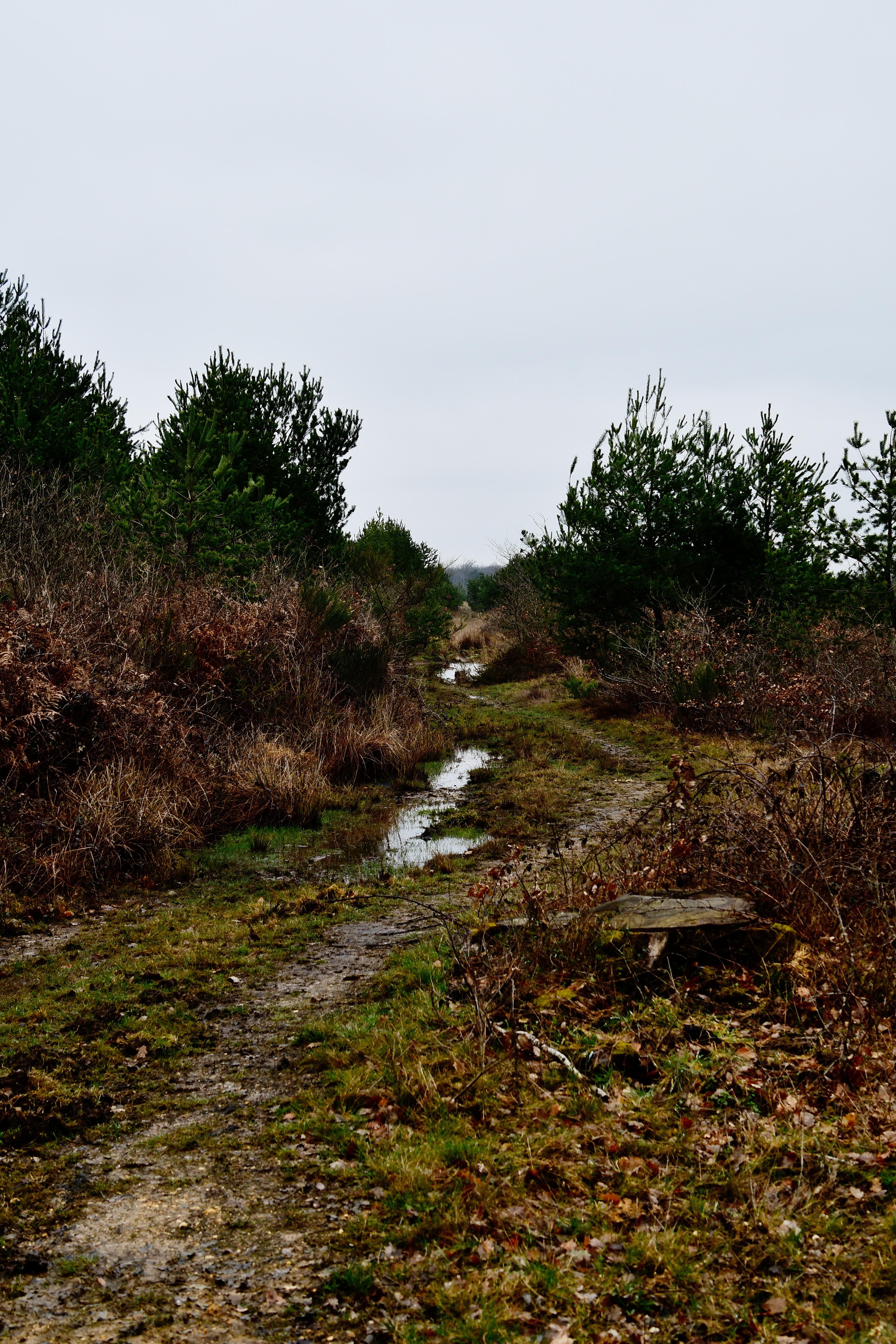 Forêt de moulière - les chirons noirs (voir l'itinéraire sur : http://ansozour.free.fr/enbalade.html) photo
