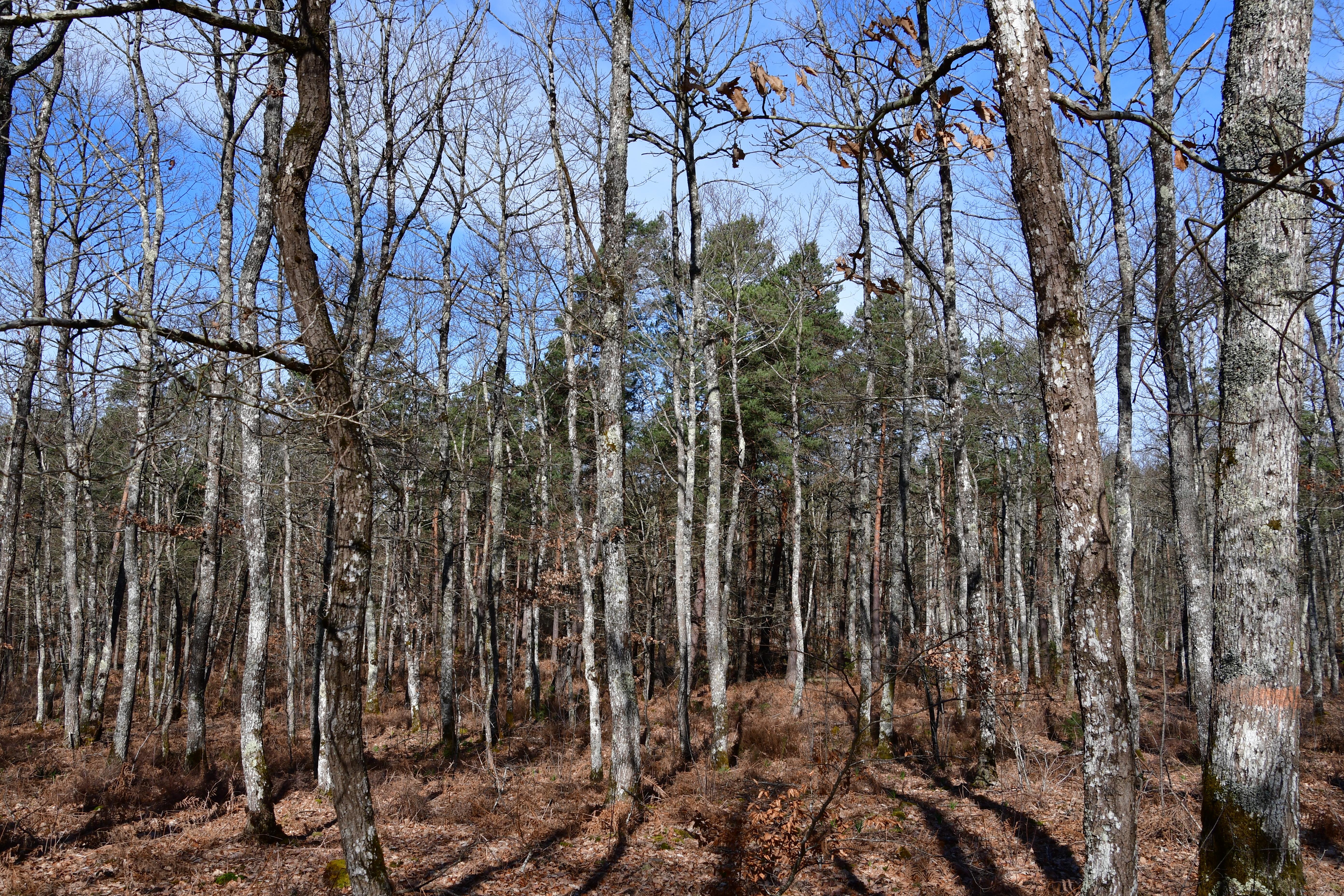 Forêt de moulière - les renardières (voir l'itinéraire sur : http://ansozour.free.fr/enbalade.html) photo