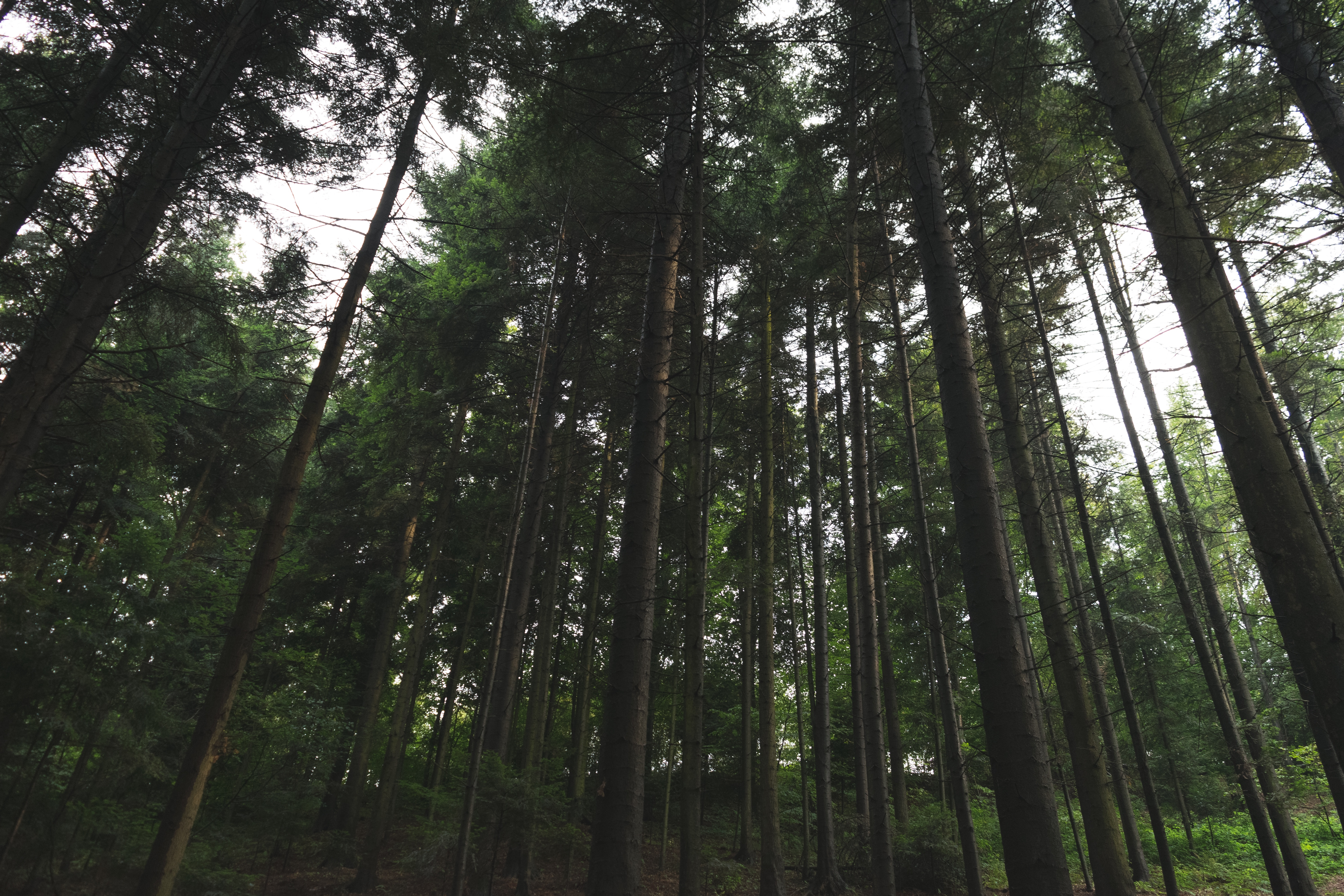 Forest, Tree, Wood, Plants, Green, HQ Photo