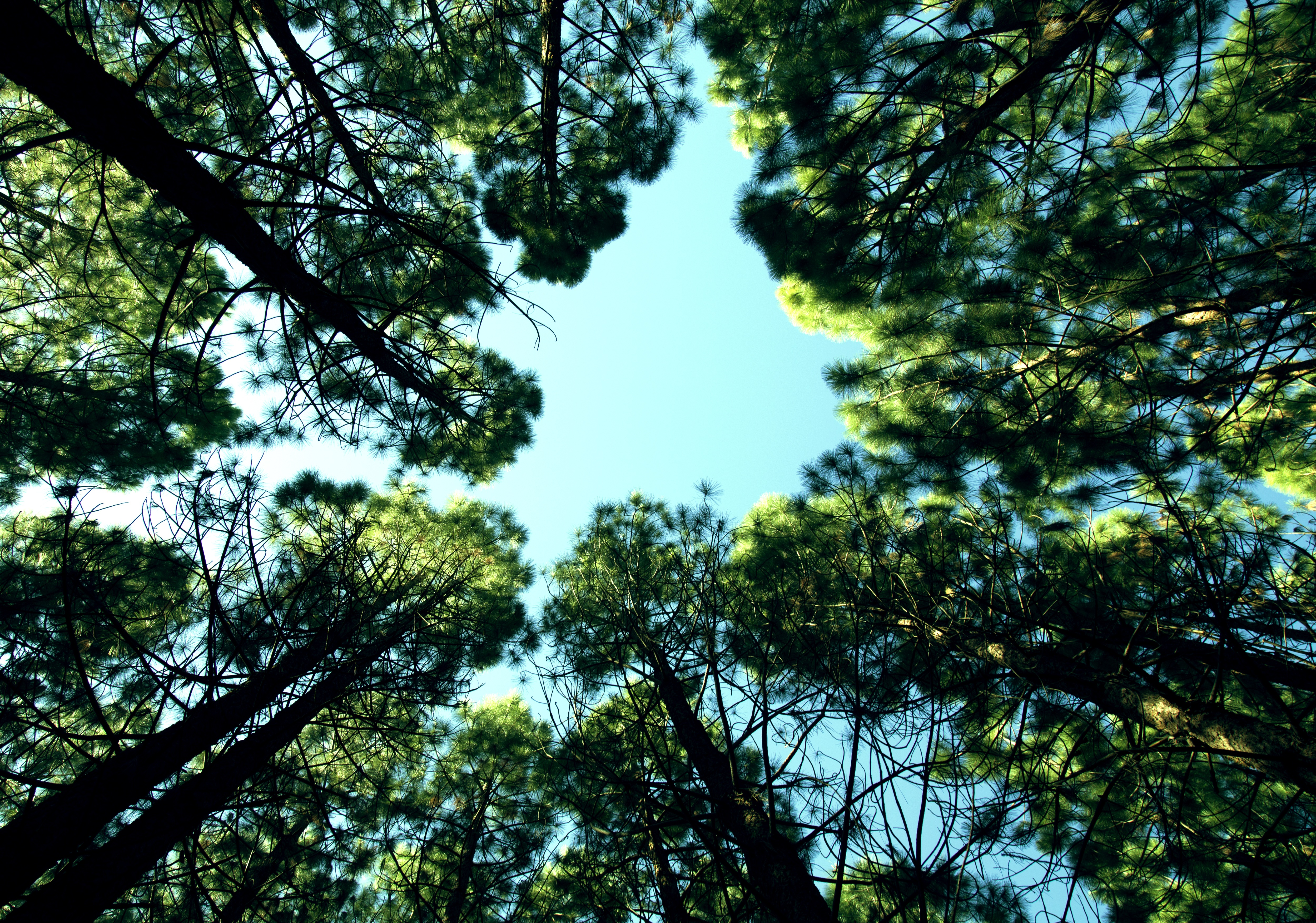 Forest, Tree, Wood, Sky, Plants, HQ Photo