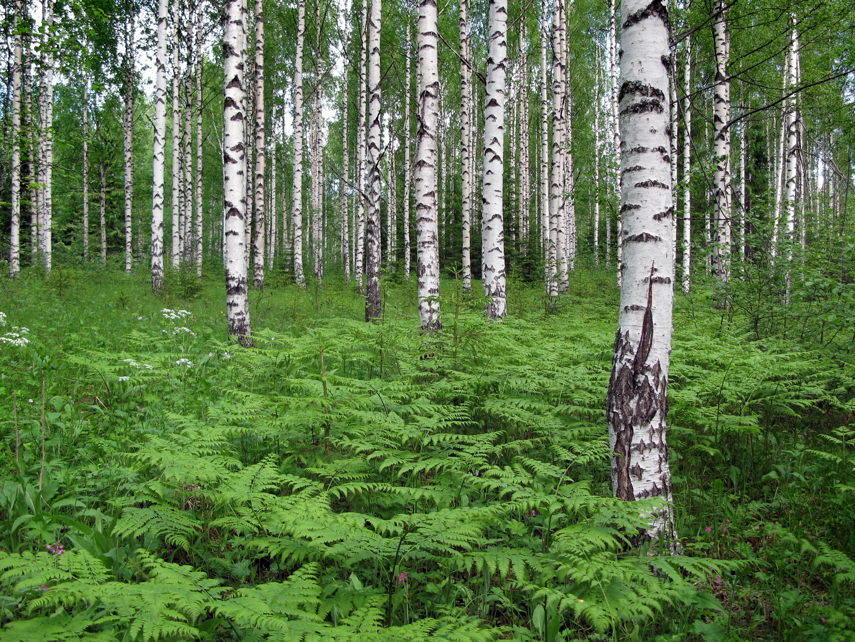 The Forest – a Finnish Favourite — VisitFinland.com