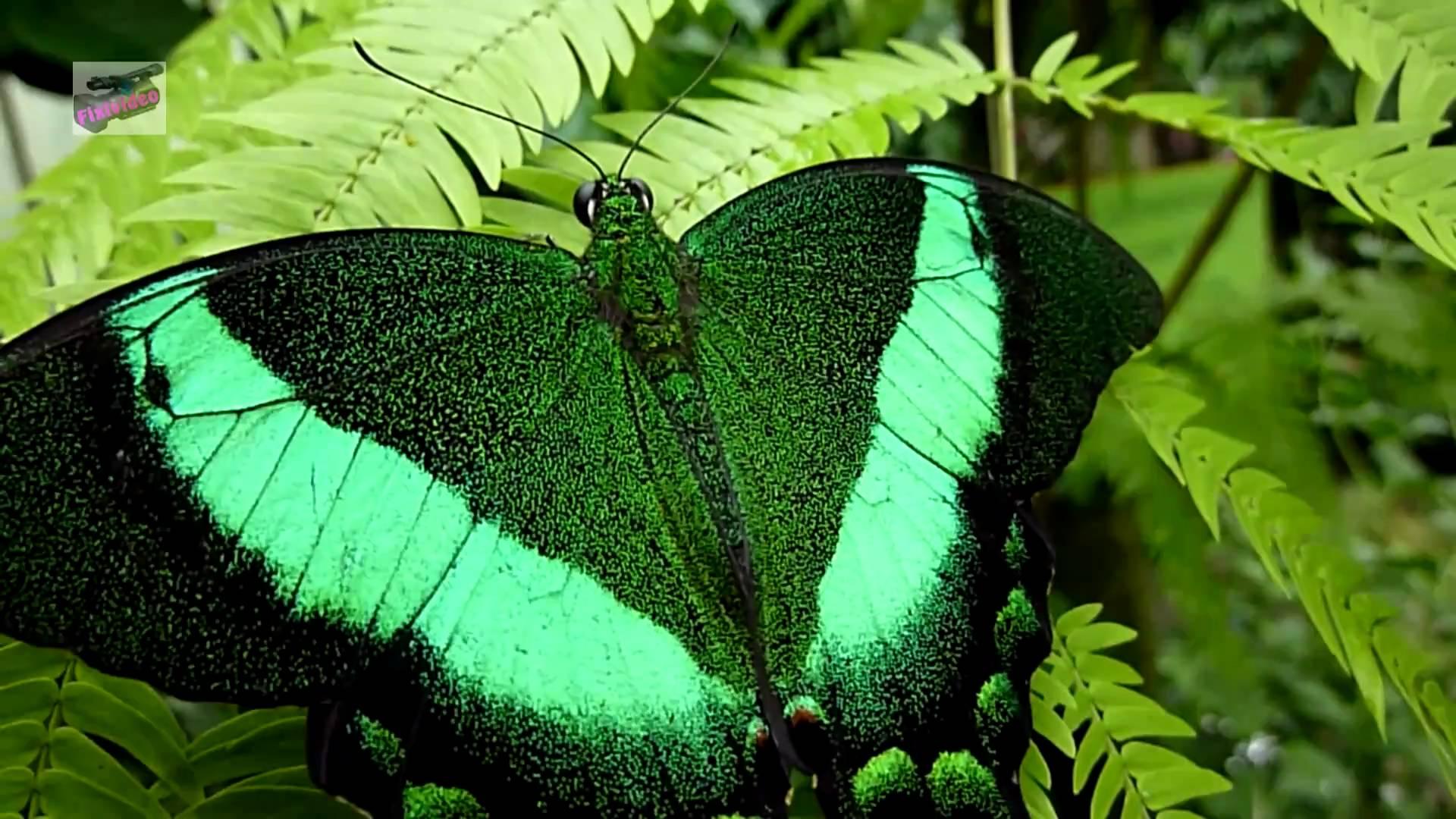 Die Schmetterlinge im Schmetterlingswald Maxipark Hamm / The ...