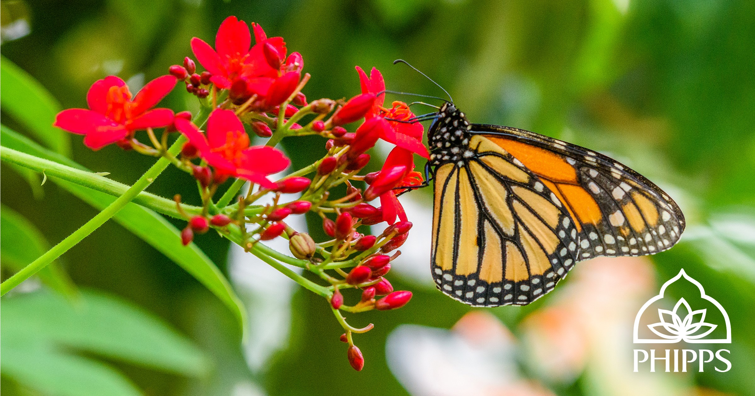 See Butterflies Take Flight in Phipps Conservatory's Butterfly ...