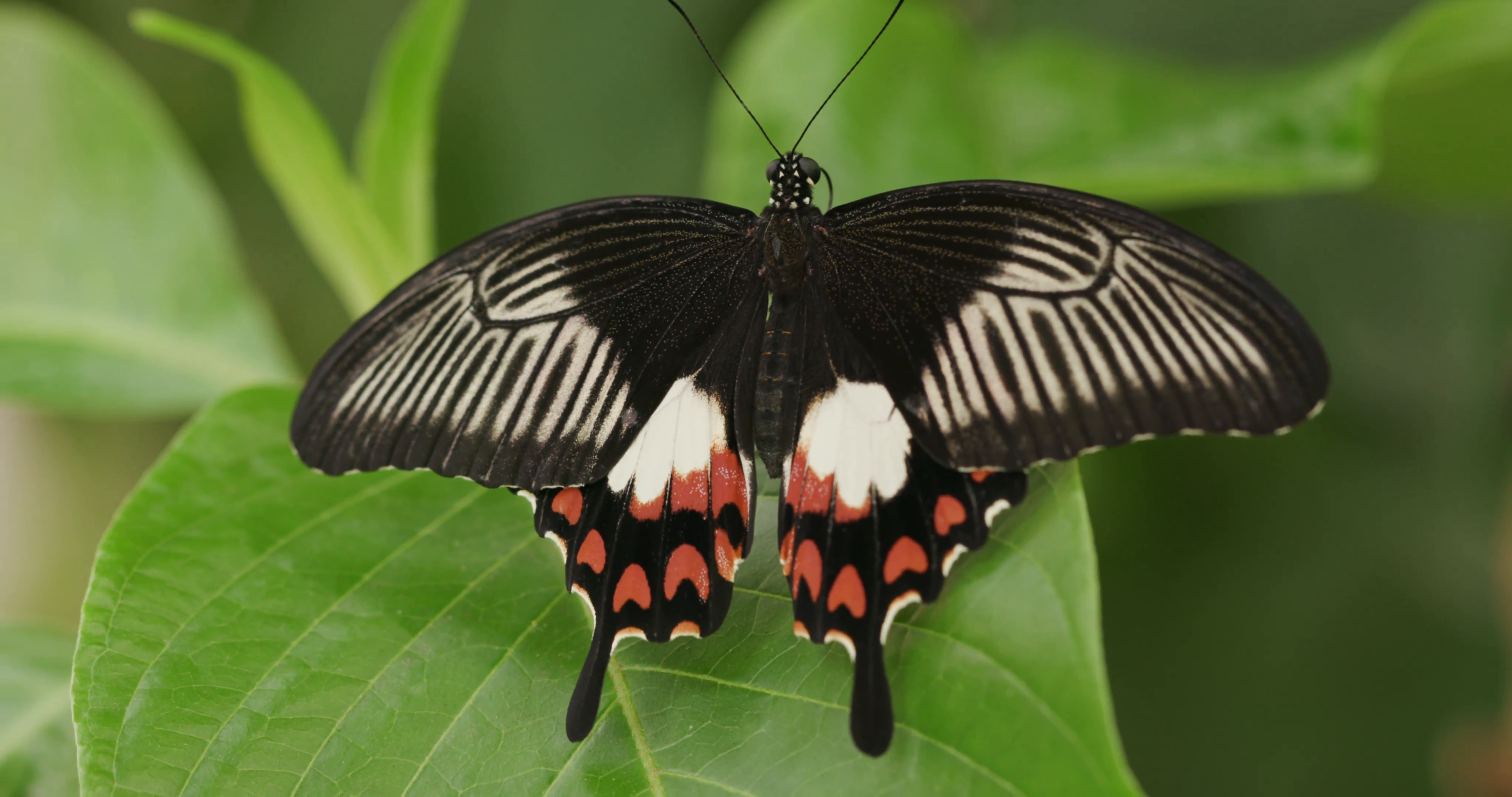 Tropical butterfly resting in the forest Stock Video Footage ...