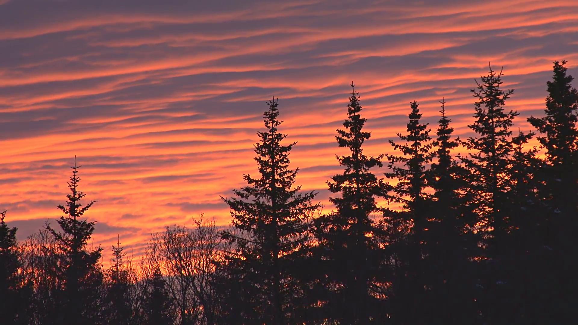 Dark Forest Silhouette Sunset 2 Stock Video Footage - Videoblocks
