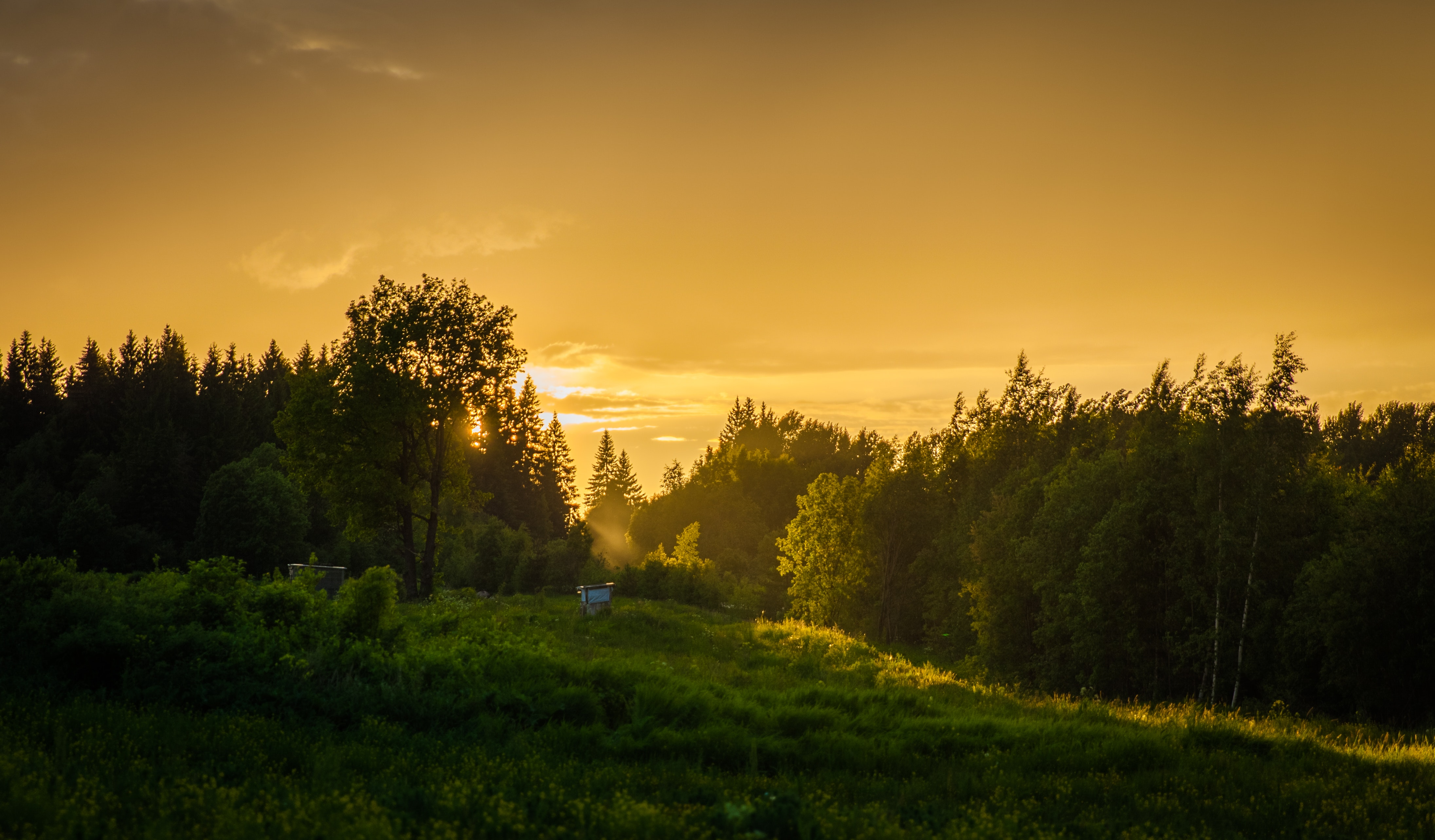 Forest During Sunset, Backlit, Countryside, Dawn, Daylight, HQ Photo