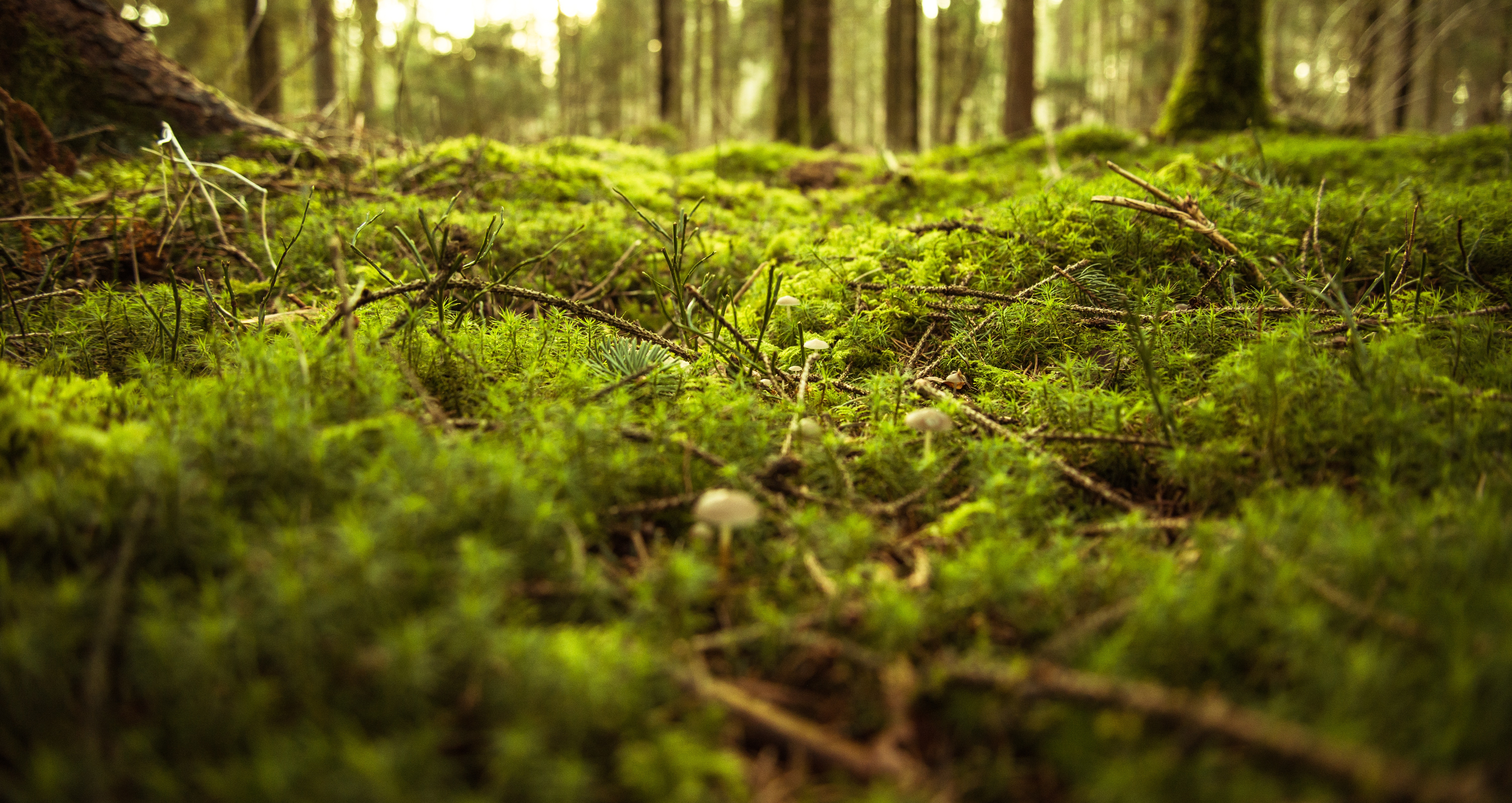 Free Photo of Forest Ground