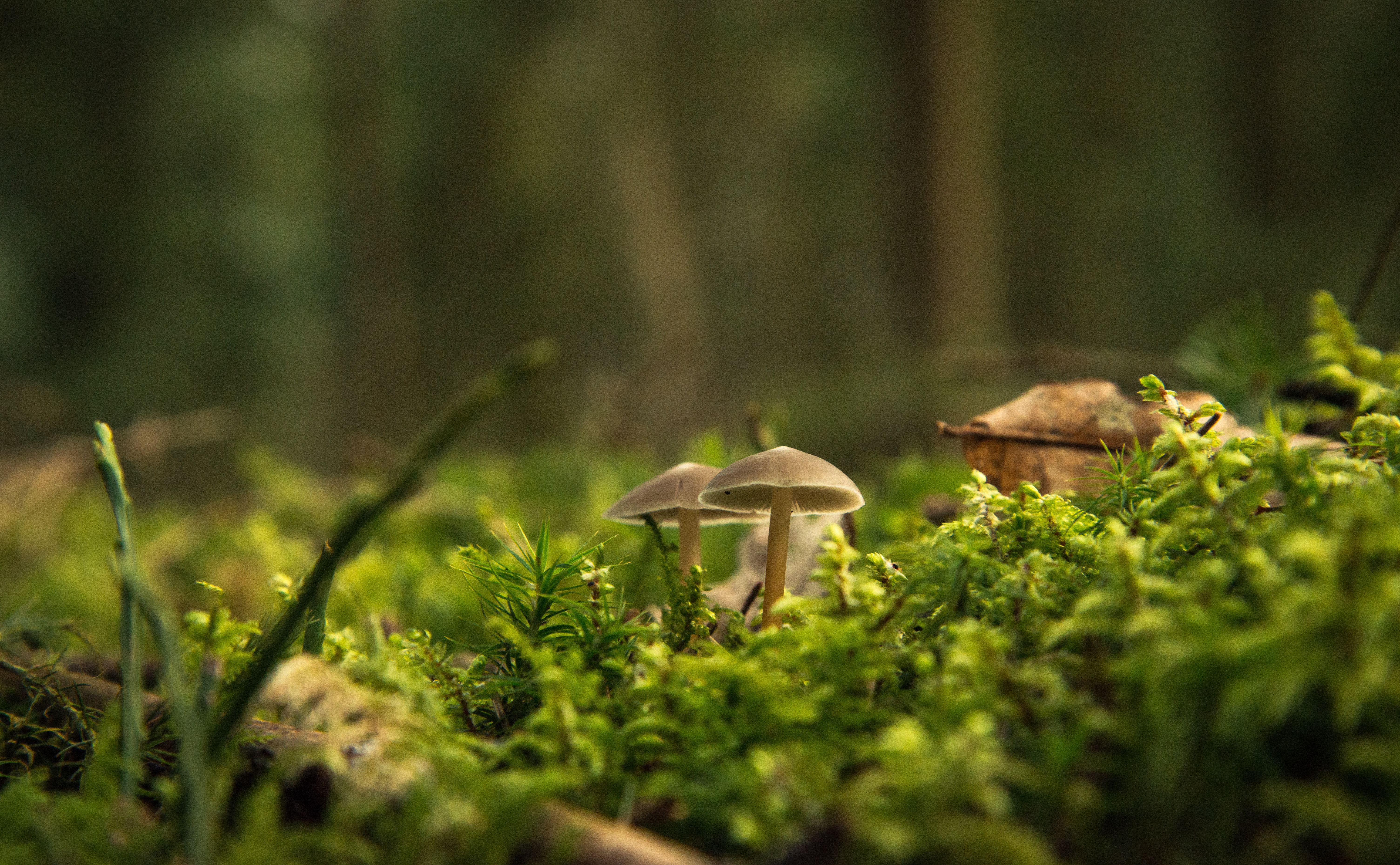Free stock photo of beautiful, forest, ground