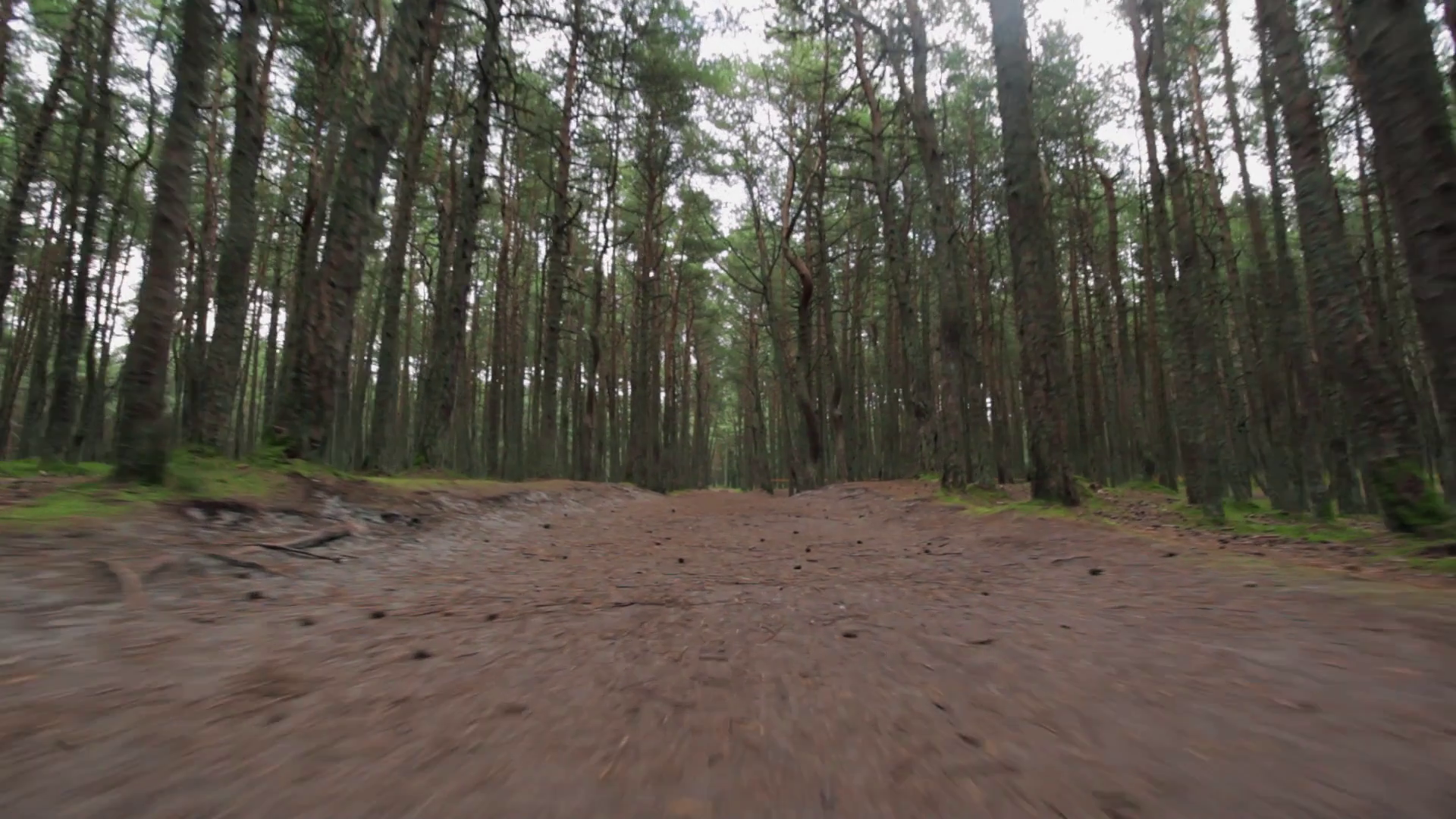 Camera moves at low FPV angle across leafy ground in a forest Stock ...