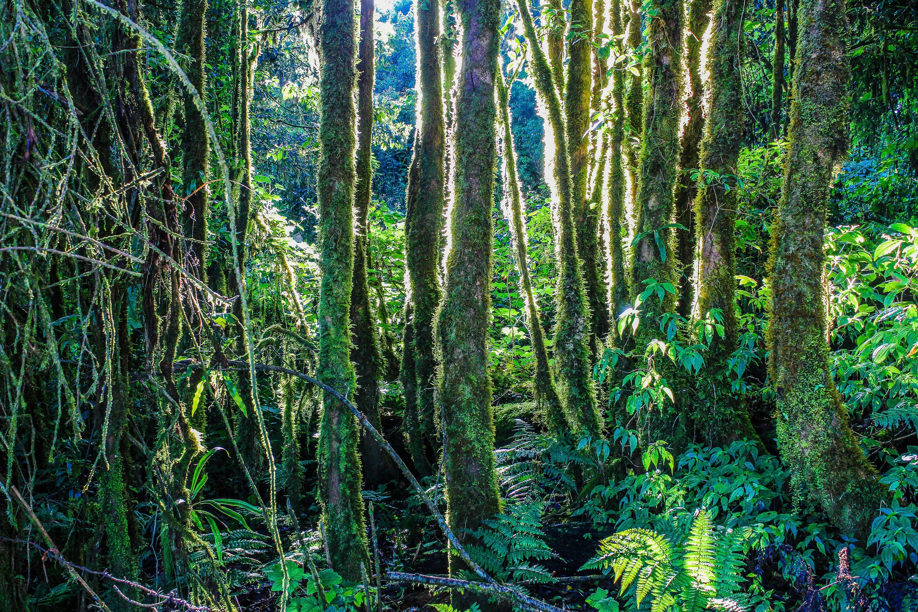 Forest illustration photo