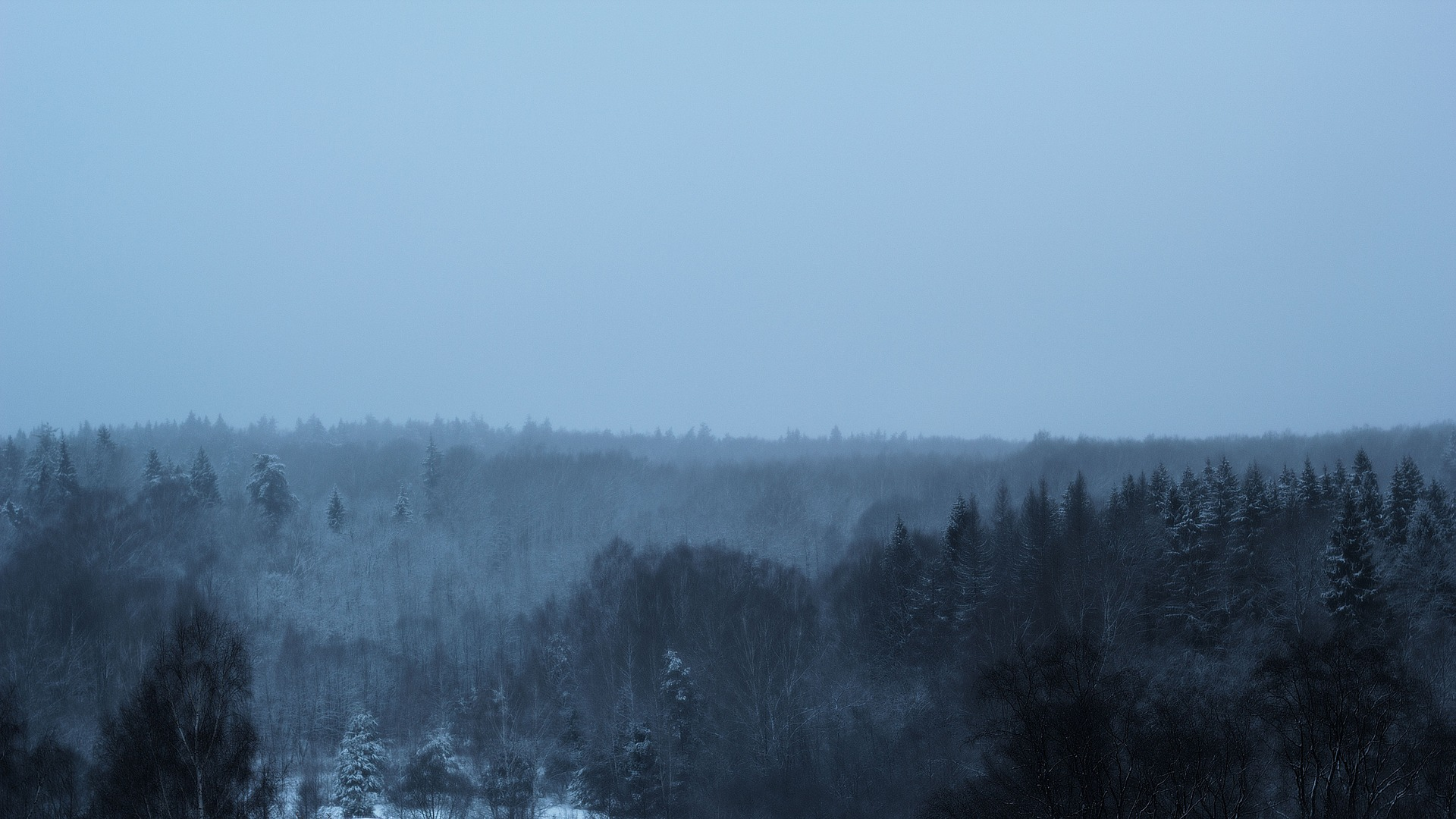 Forest in Winter, Bunch, Cold, Forest, Jungle, HQ Photo