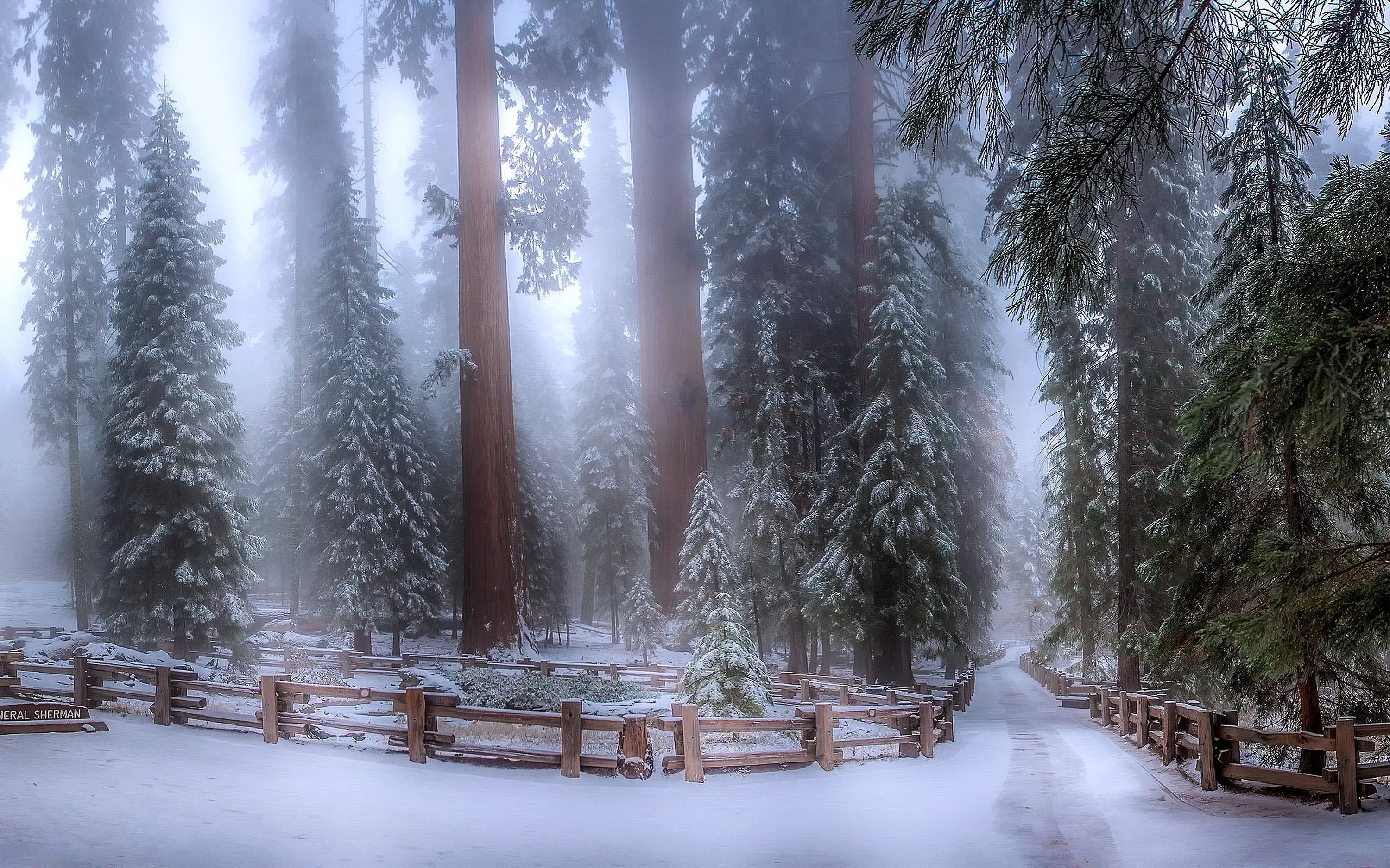 Sequoia forest in winter / 3000 x 1875 / Forest / Photography ...