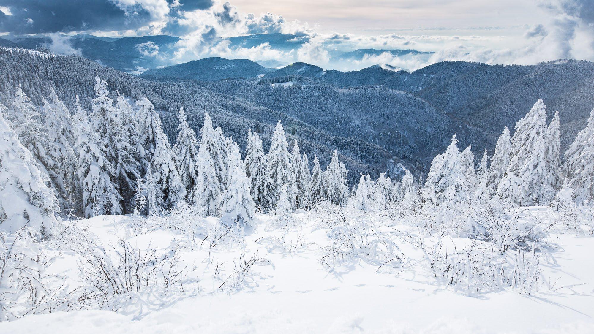 WINTER | Black Forest National Park - YouTube