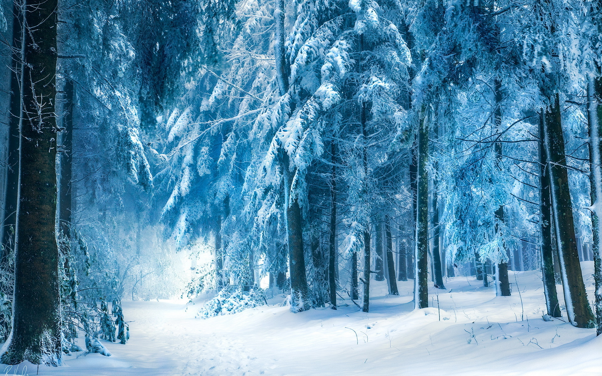Winter Forest Wallpapers, 44 Winter Forest HDQ Images | Wallpapers ...