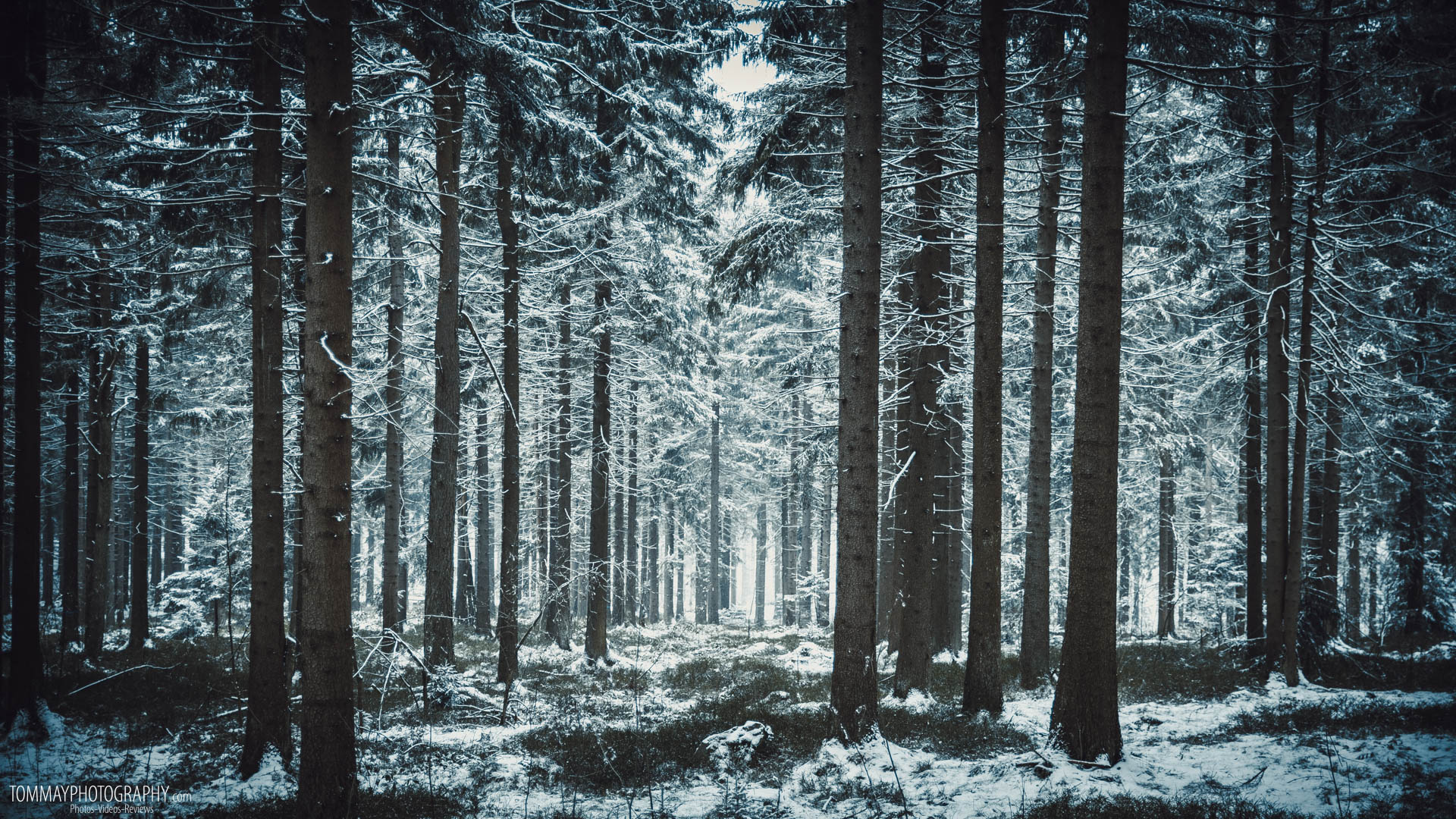 Winter Forest - Bing Images | Trees, forests, and gardens ...