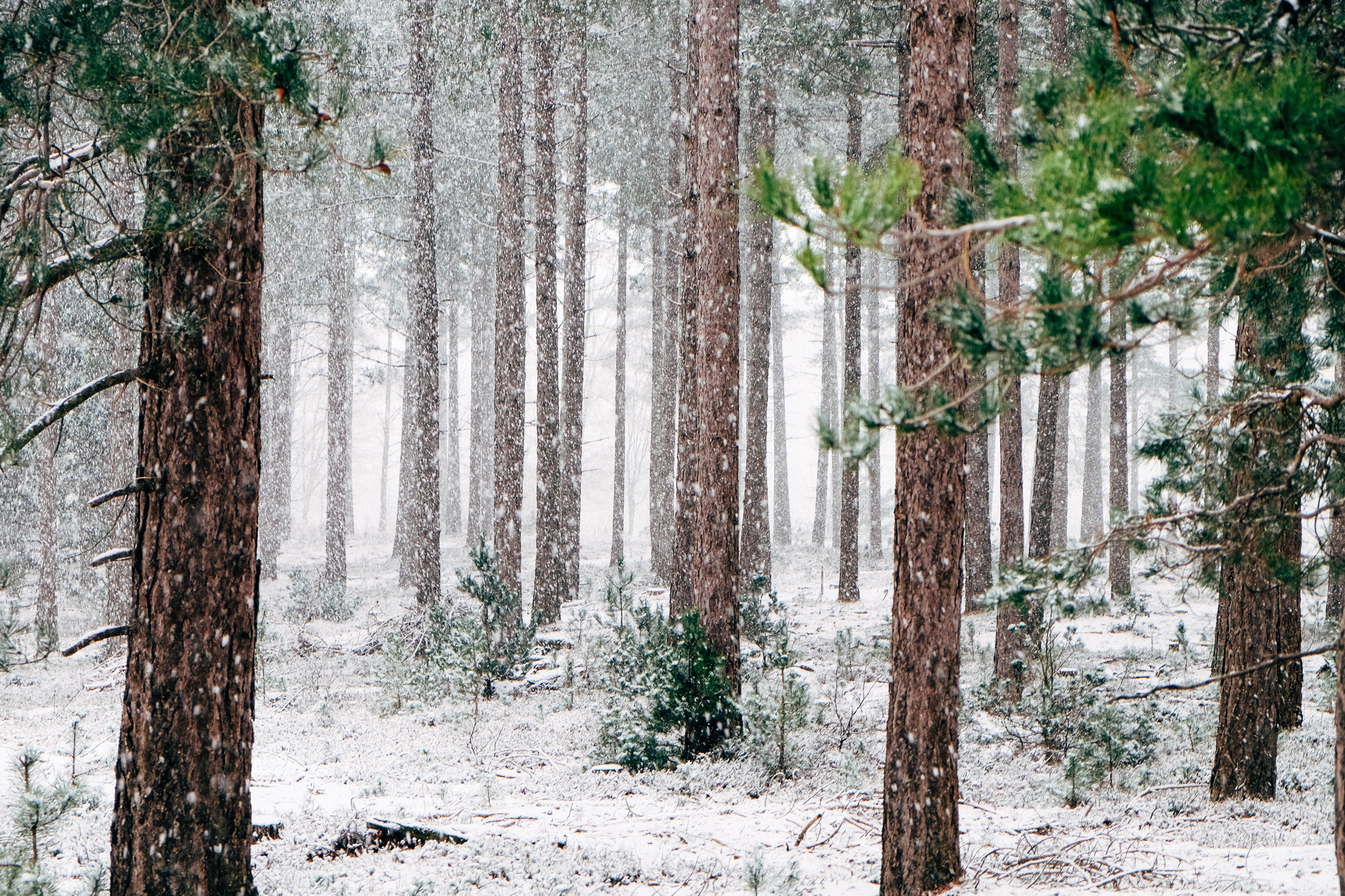 Forest In Winters, Forest, Ice, Jungle, Plant, HQ Photo