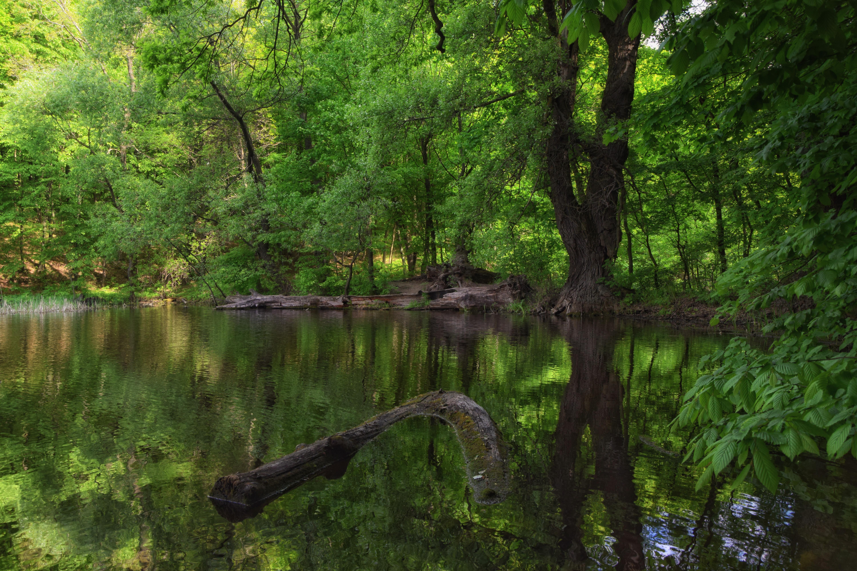 File:Forest Lake in Atamansky park.JPG - Wikimedia Commons