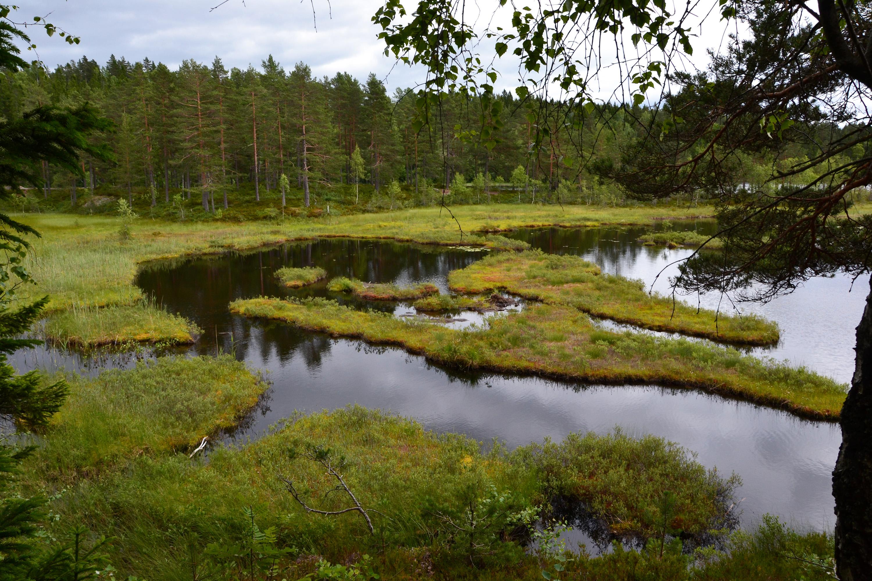 Forest lake, Boggy, Norge, Wood, Wetland, HQ Photo